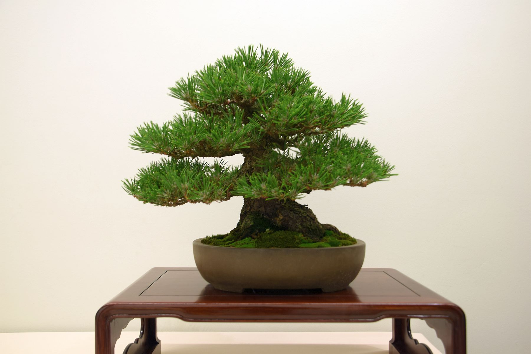 euk-bonsai-ten-2016-club-bonsai-001