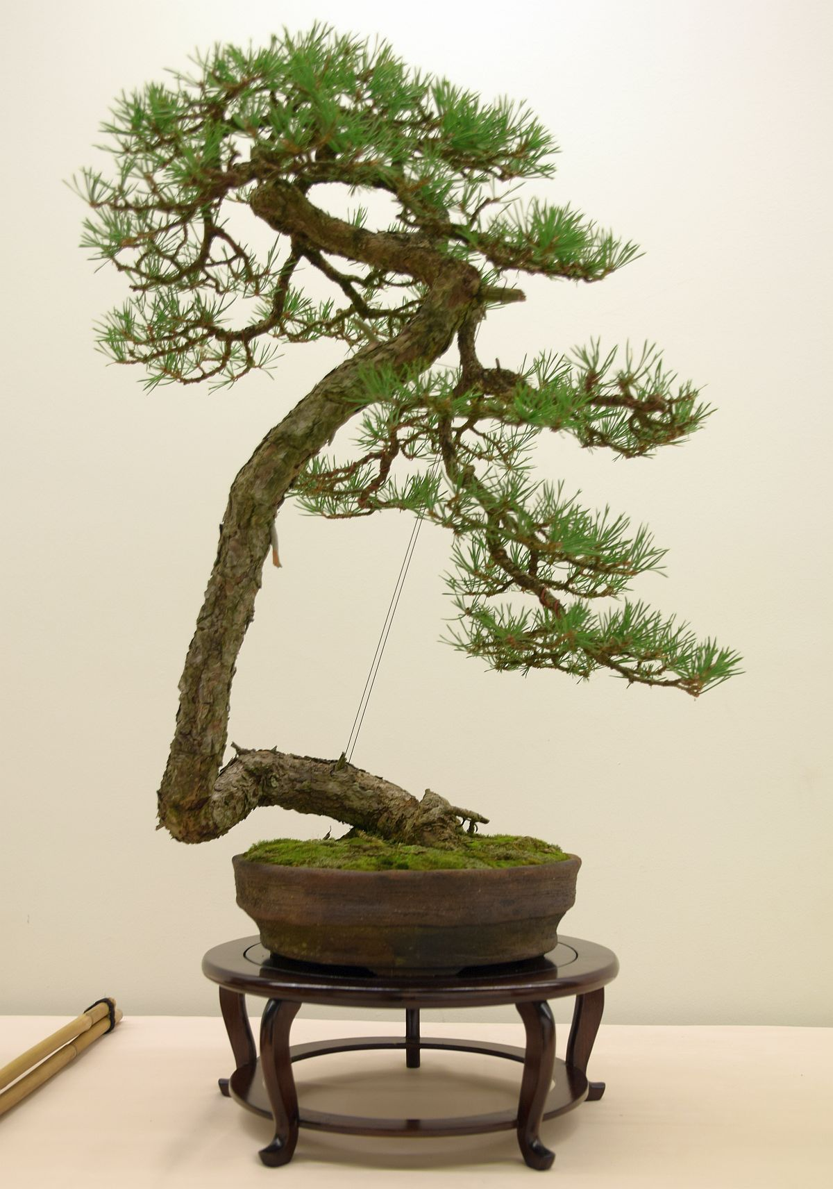 euk-bonsai-ten-2016-club-bonsai-005