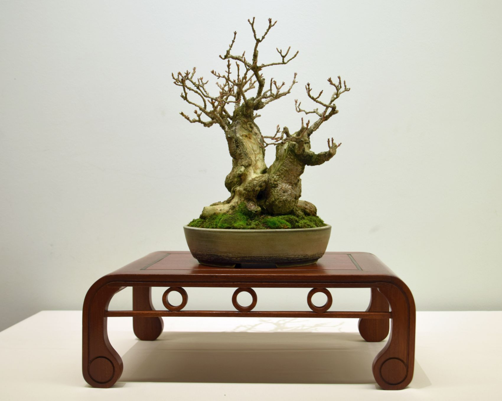 euk-bonsai-ten-2016-club-bonsai-007