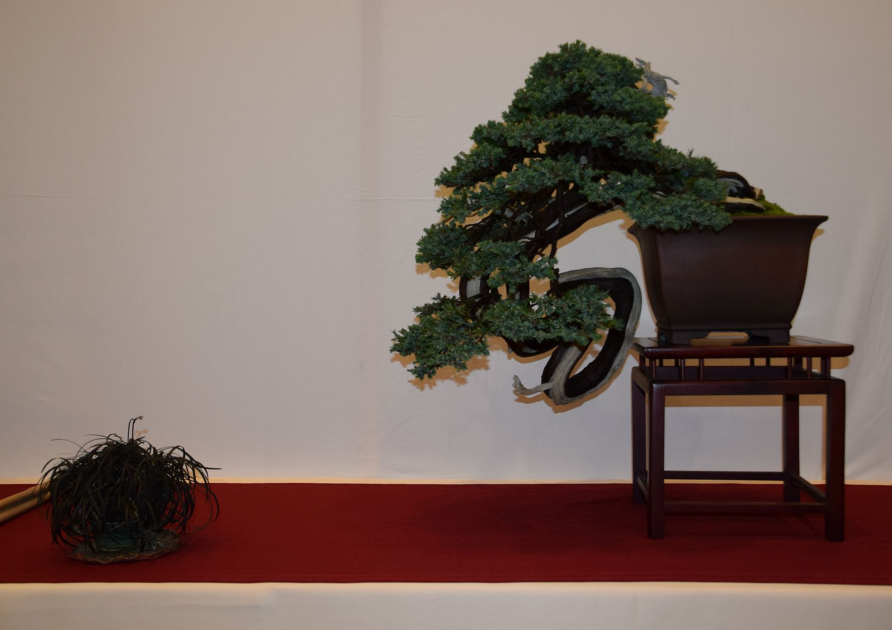 euk-bonsai-ten-2016-club-bonsai-008