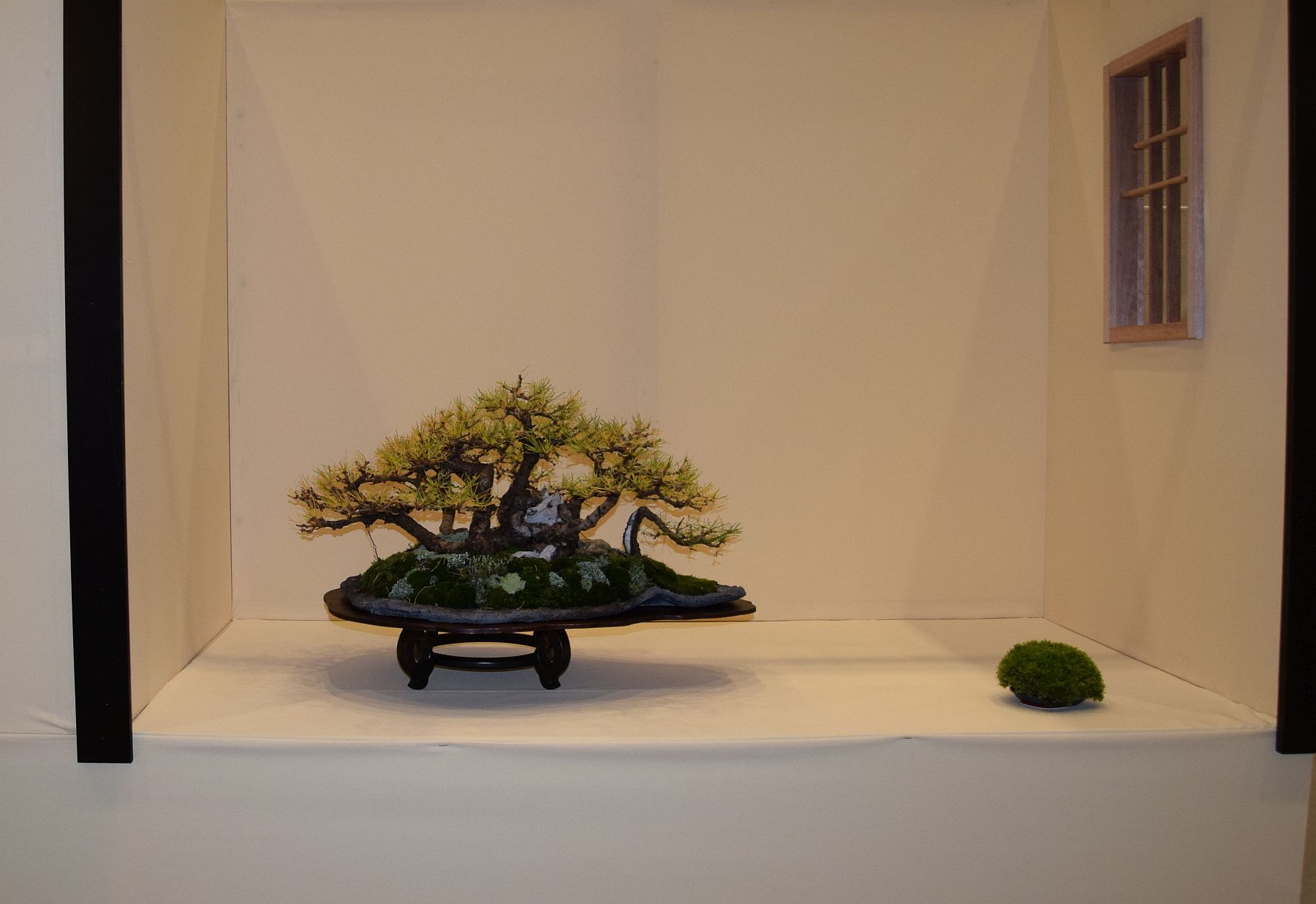 euk-bonsai-ten-2016-club-bonsai-009