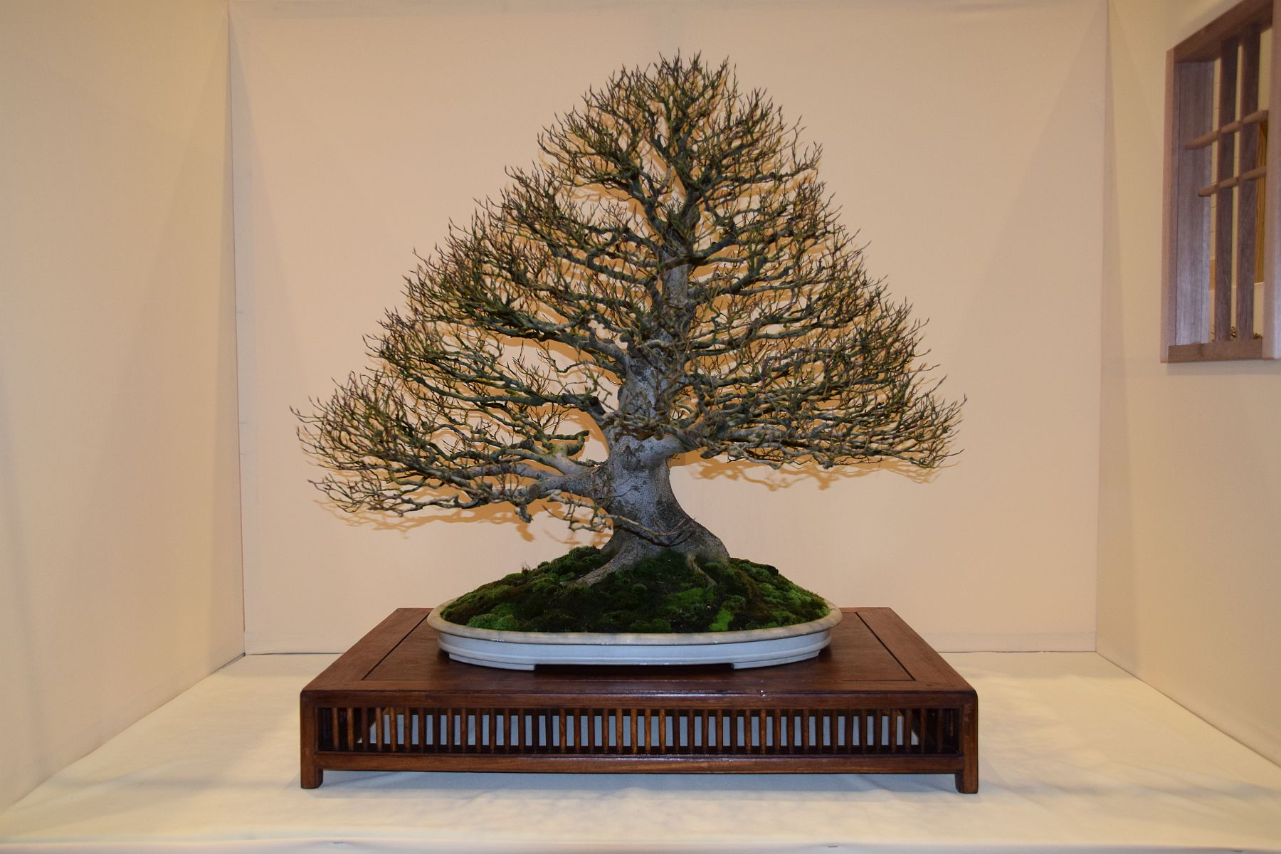 euk-bonsai-ten-2016-club-bonsai-010