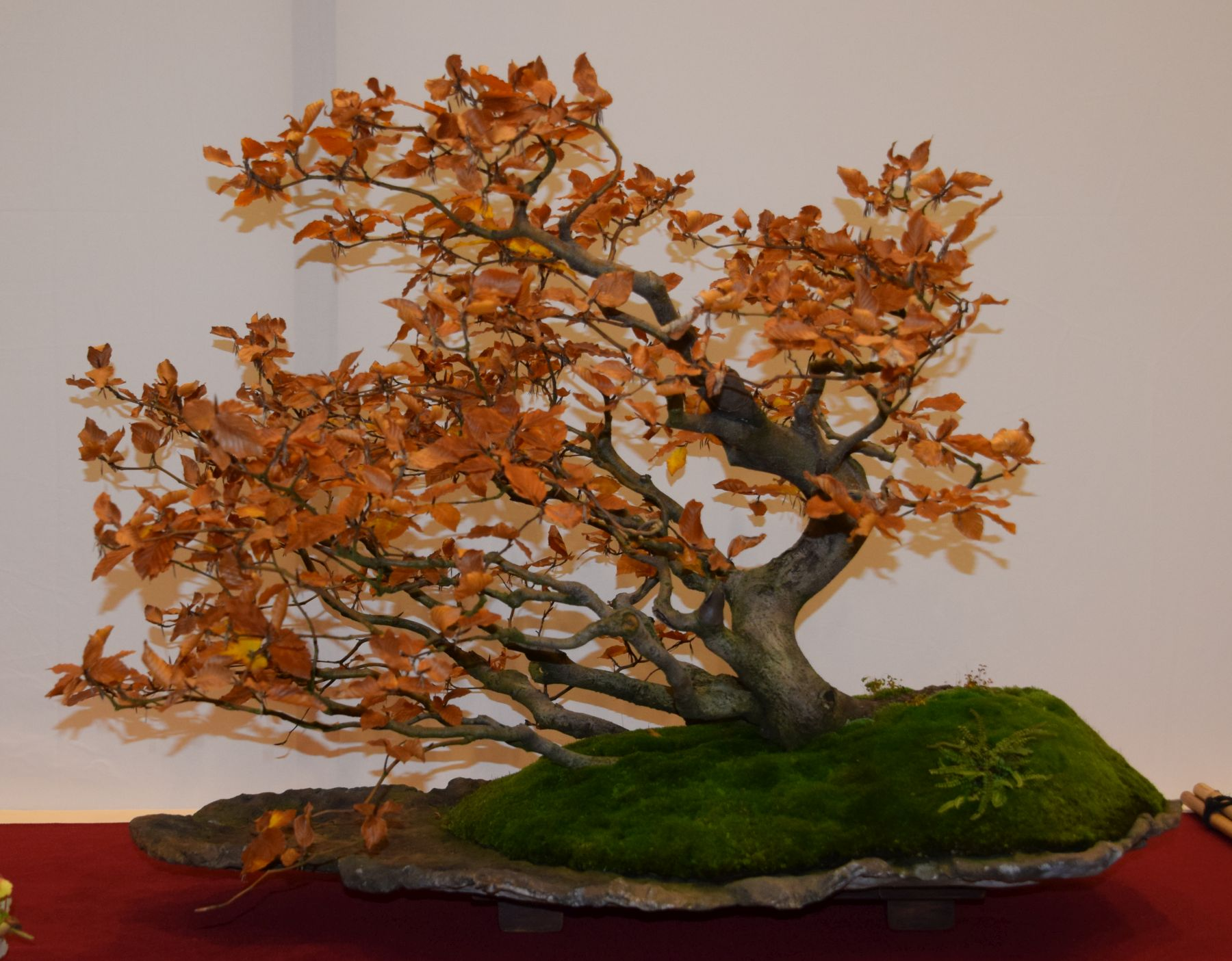 euk-bonsai-ten-2016-club-bonsai-012