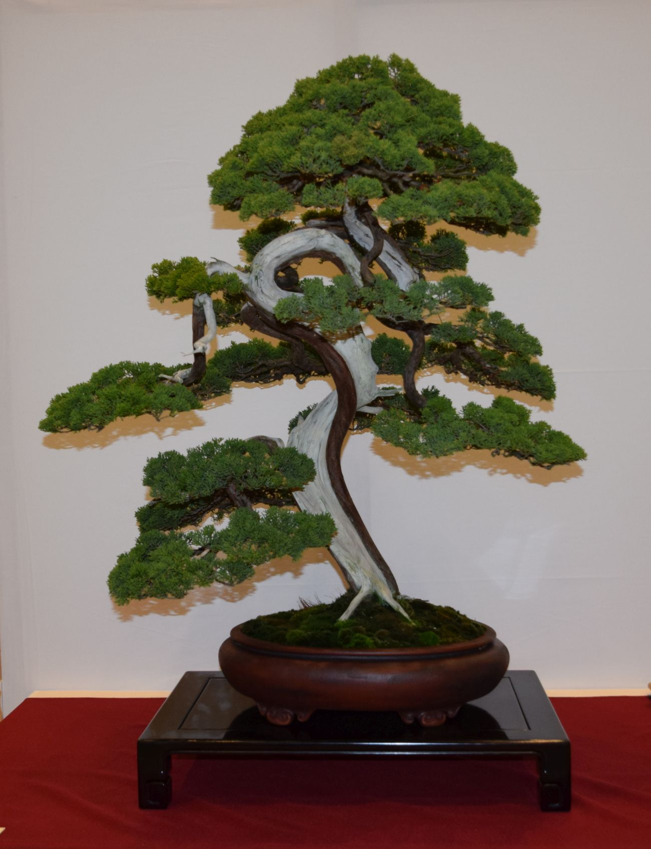 euk-bonsai-ten-2016-club-bonsai-013