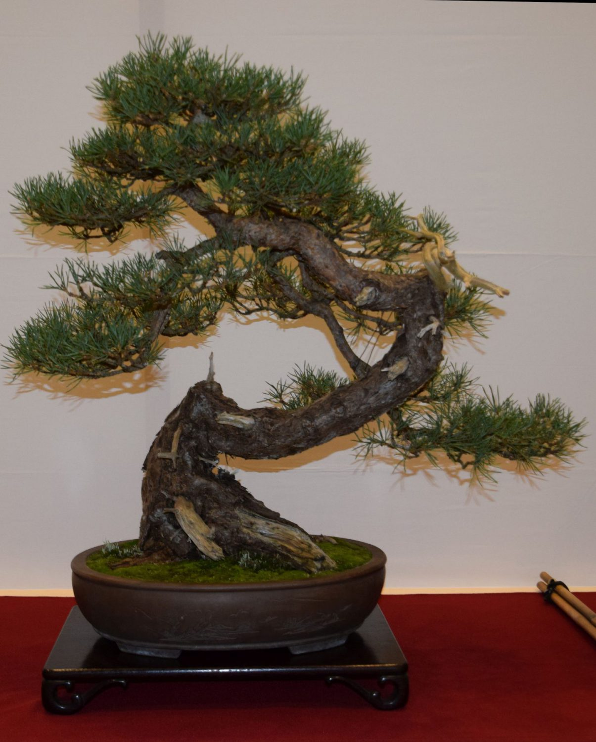 euk-bonsai-ten-2016-club-bonsai-015