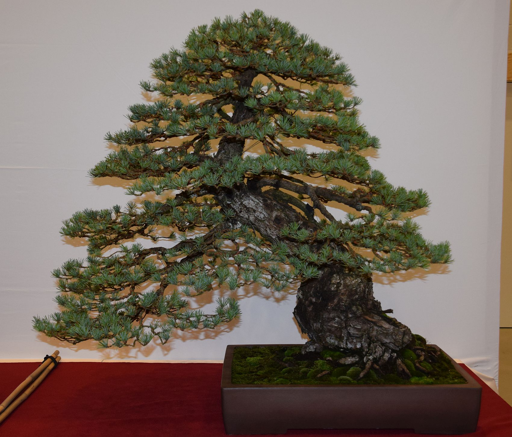 euk-bonsai-ten-2016-club-bonsai-016