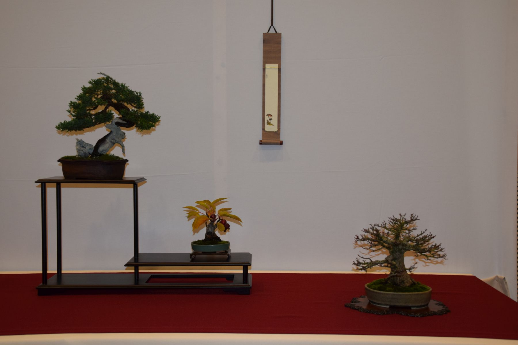 euk-bonsai-ten-2016-club-bonsai-018