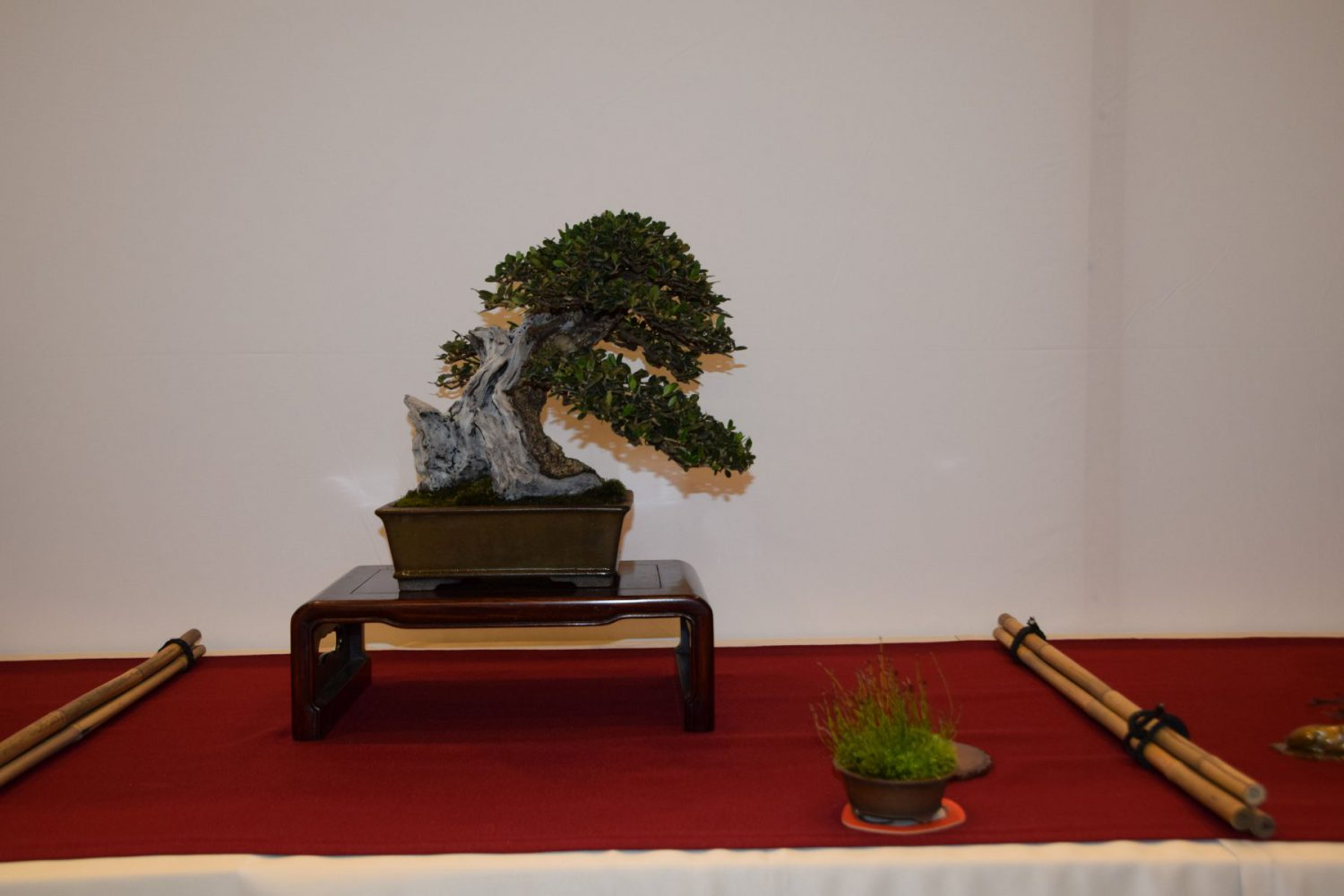 euk-bonsai-ten-2016-club-bonsai-024