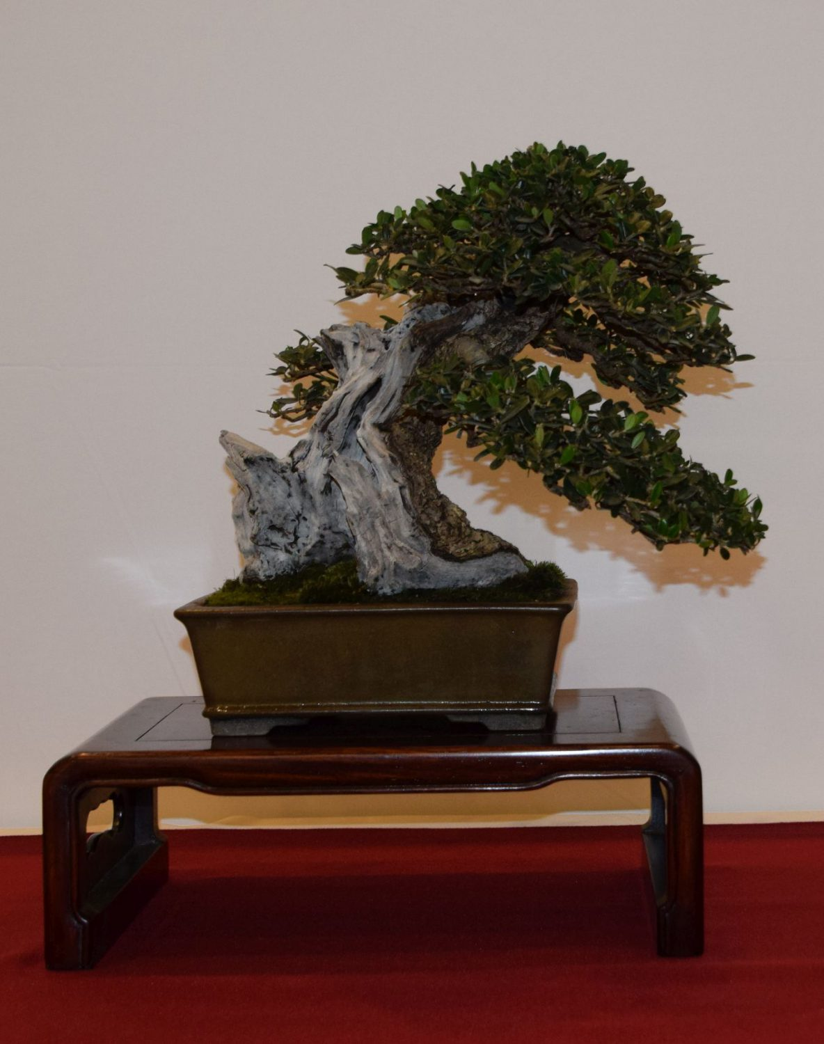 euk-bonsai-ten-2016-club-bonsai-025