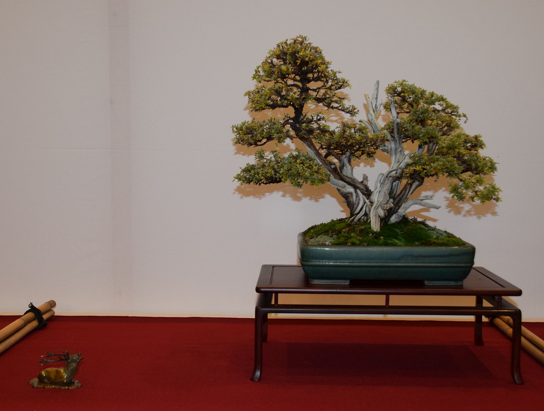 euk-bonsai-ten-2016-club-bonsai-027