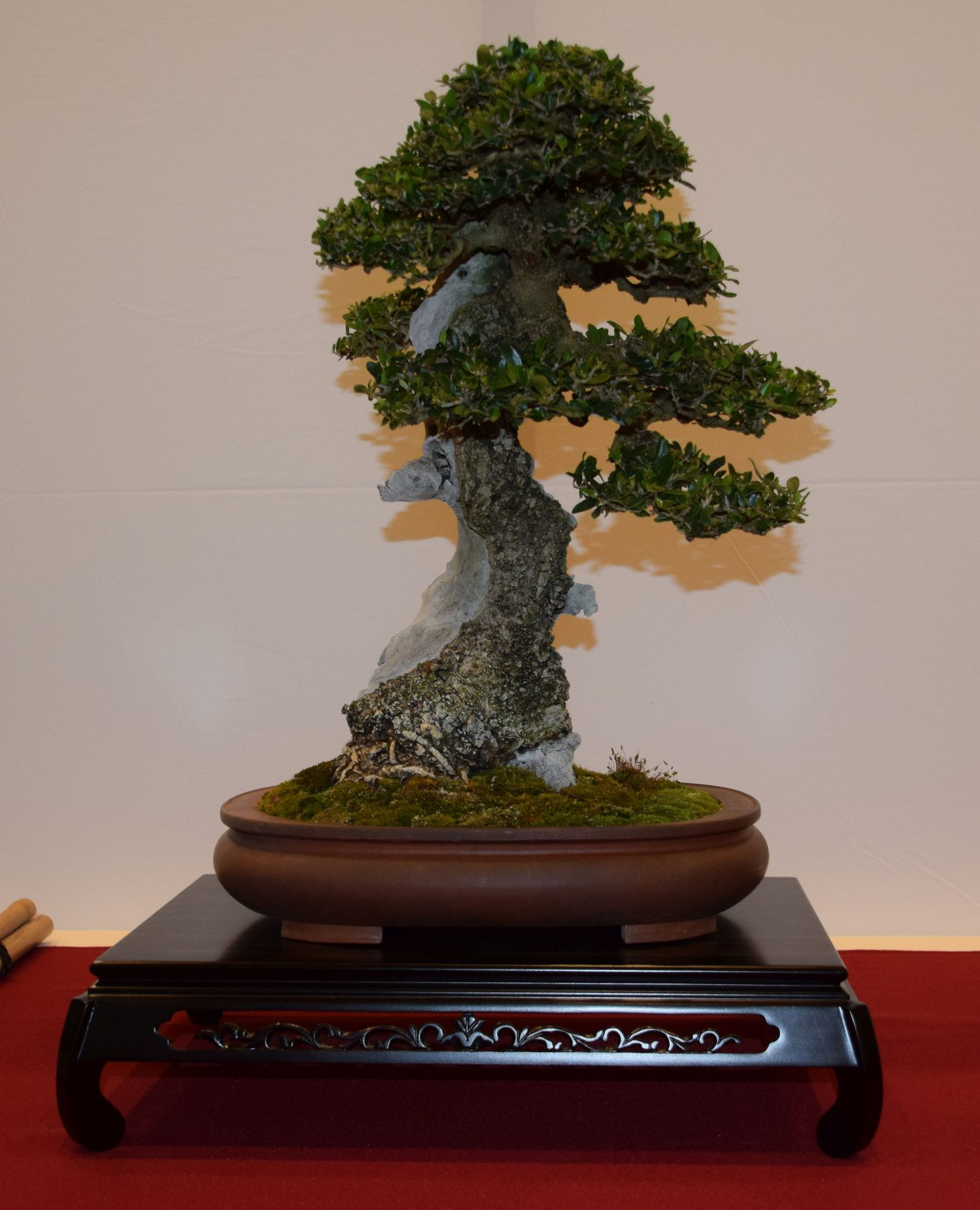 euk-bonsai-ten-2016-club-bonsai-032