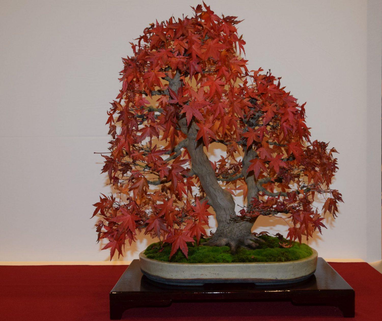 euk-bonsai-ten-2016-club-bonsai-033