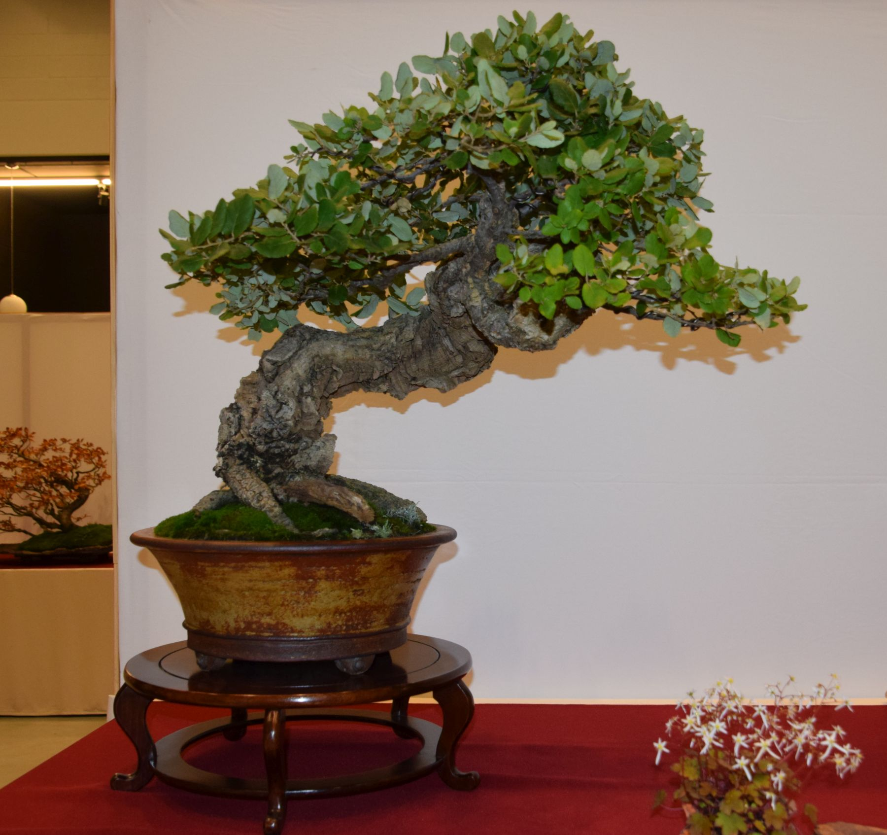 euk-bonsai-ten-2016-club-bonsai-034