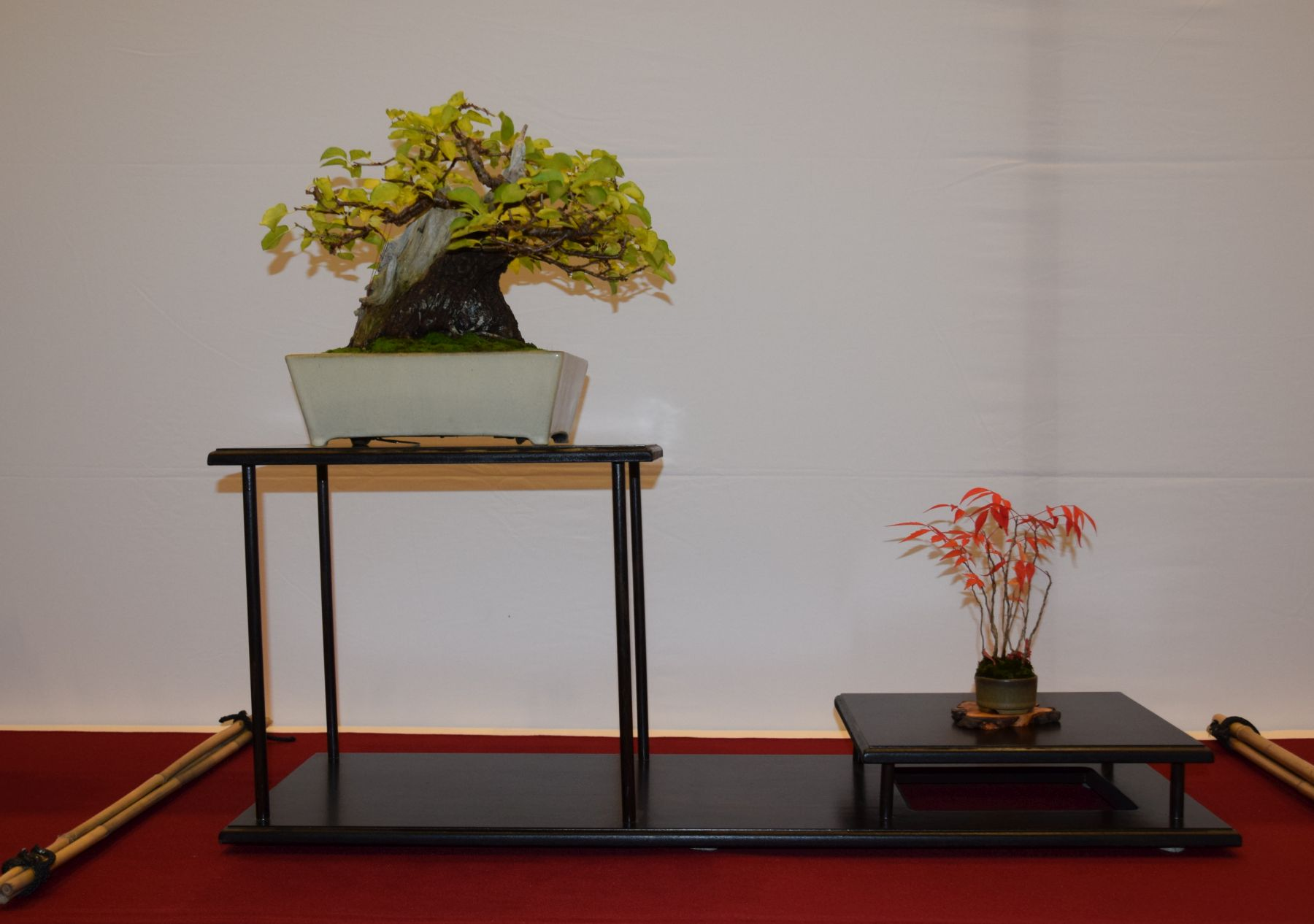 euk-bonsai-ten-2016-club-bonsai-035