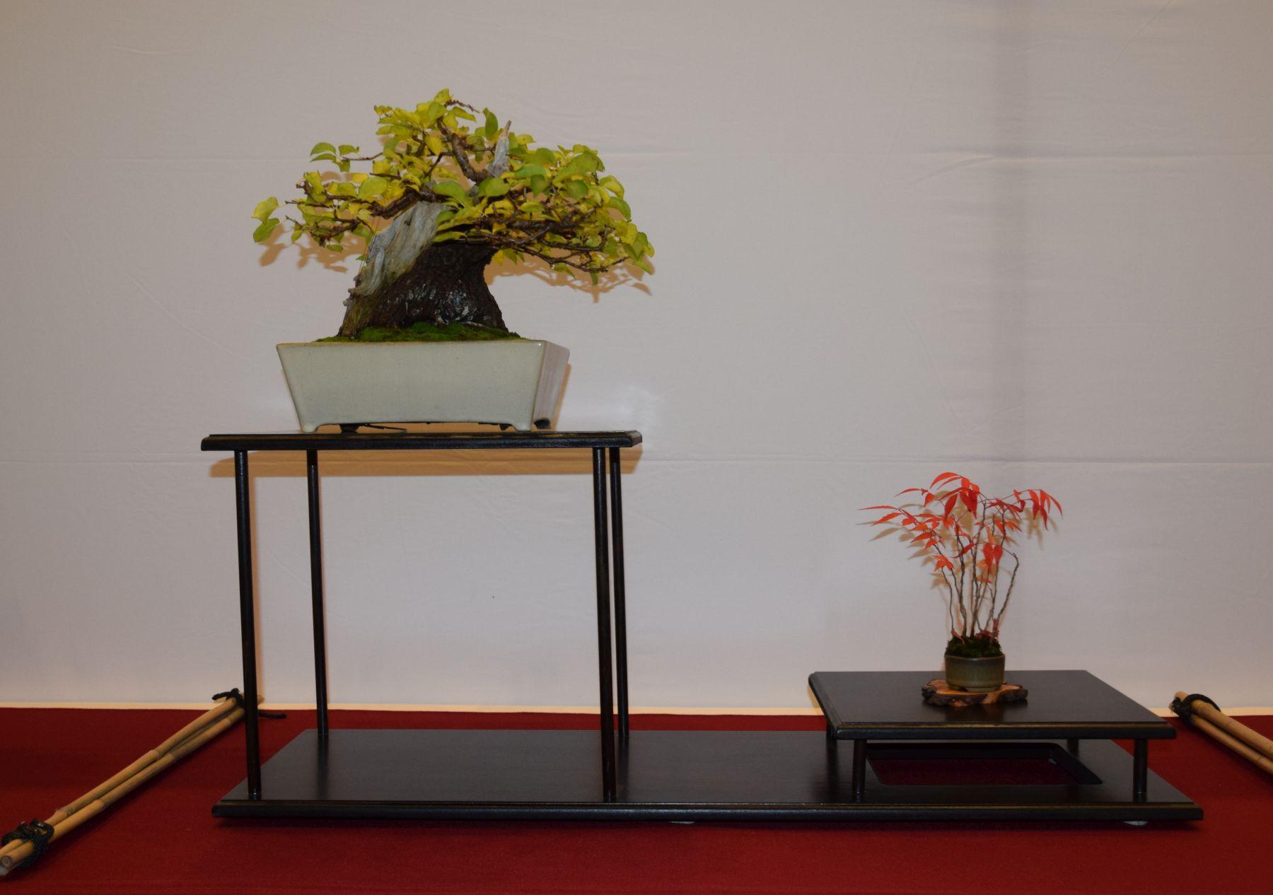 euk-bonsai-ten-2016-club-bonsai-035