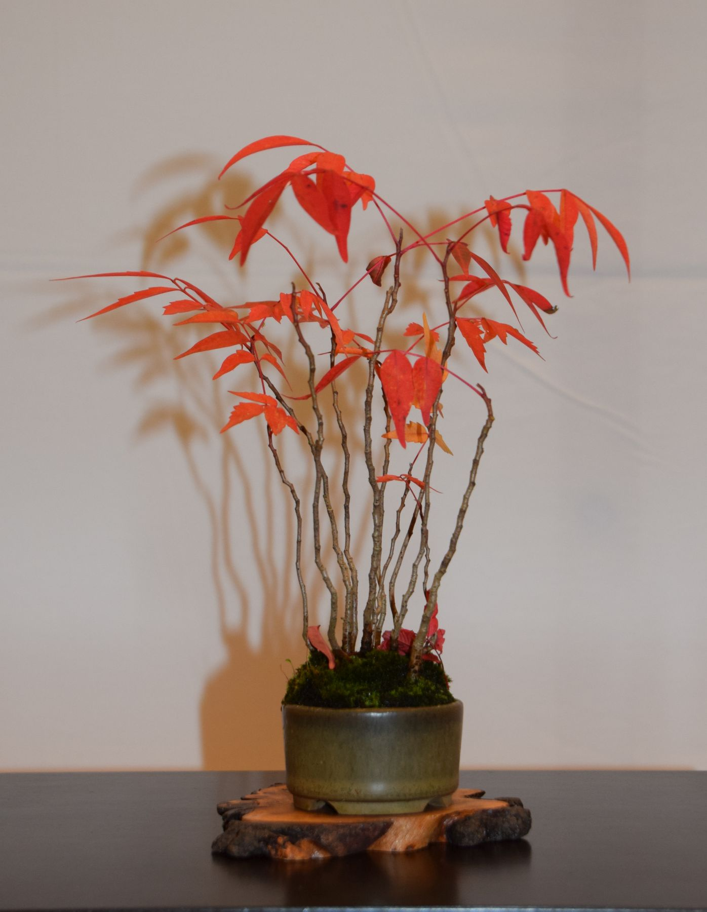 euk-bonsai-ten-2016-club-bonsai-037