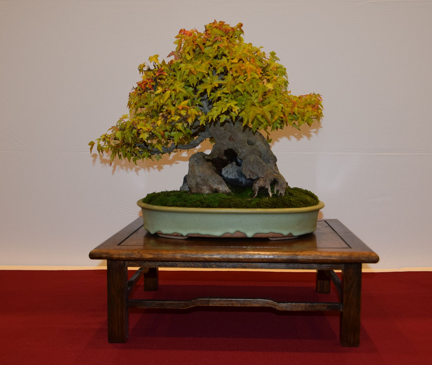 euk-bonsai-ten-2016-club-bonsai-038