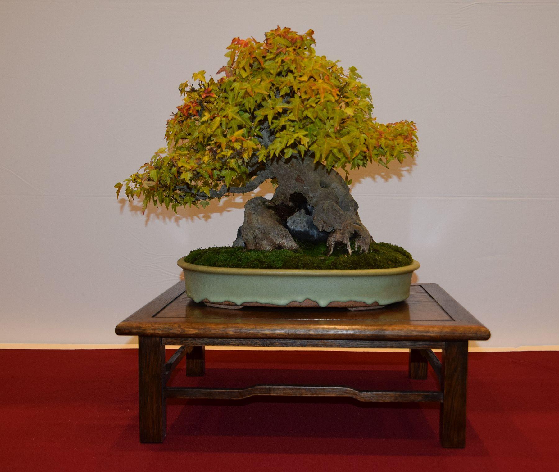 euk-bonsai-ten-2016-club-bonsai-038