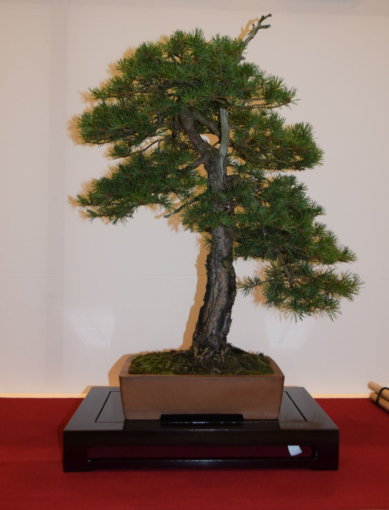 euk-bonsai-ten-2016-club-bonsai-039