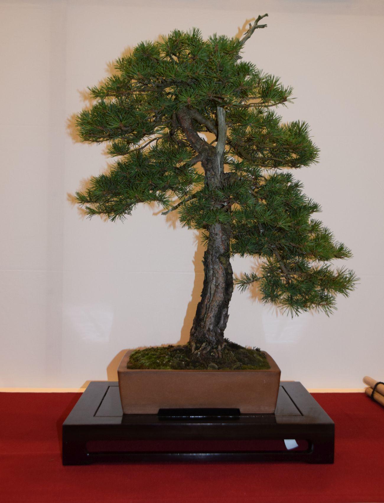 euk-bonsai-ten-2016-club-bonsai-039