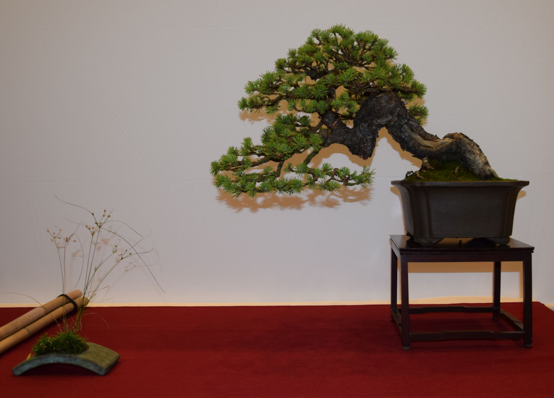 euk-bonsai-ten-2016-club-bonsai-040