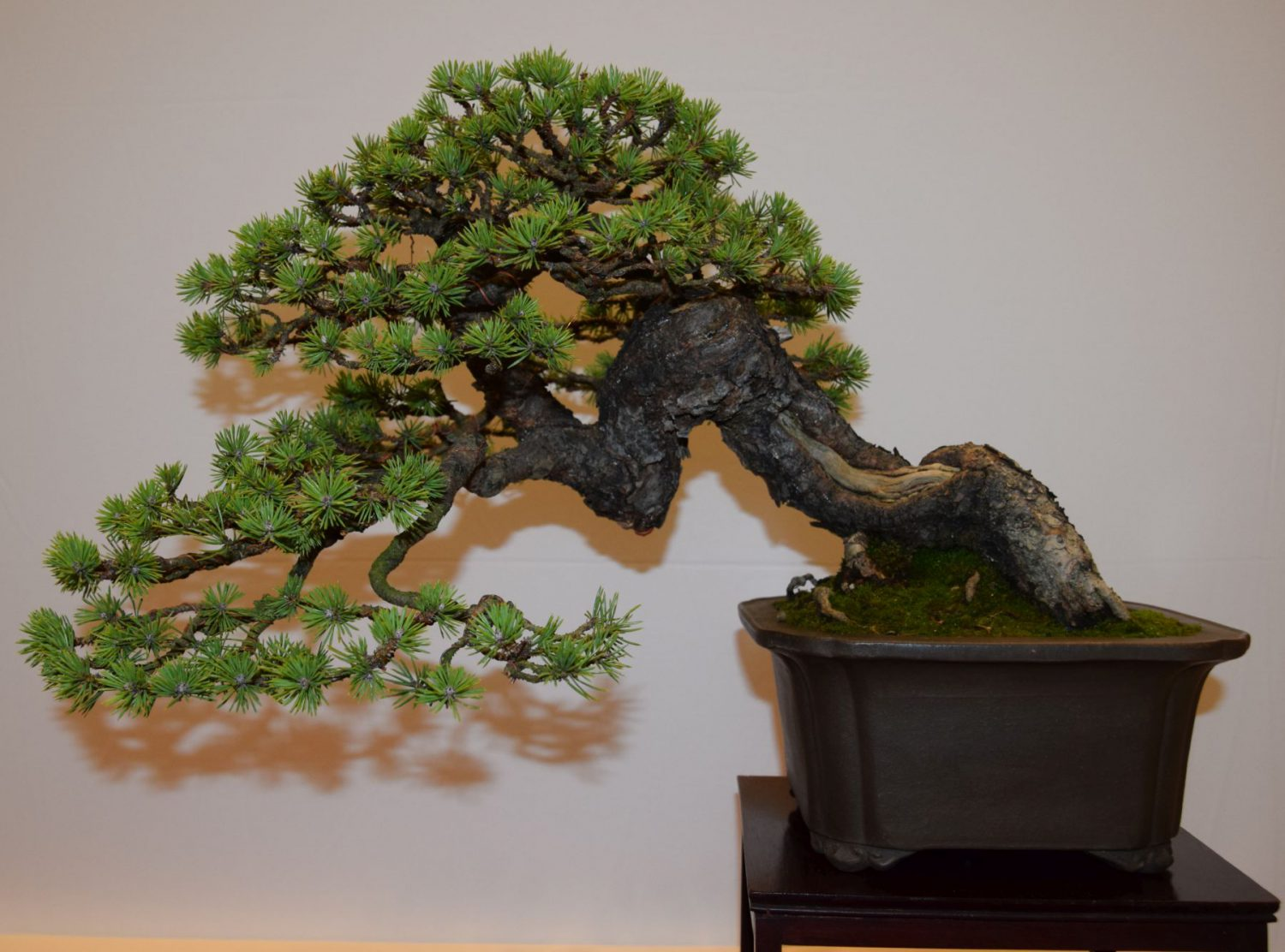 euk-bonsai-ten-2016-club-bonsai-041