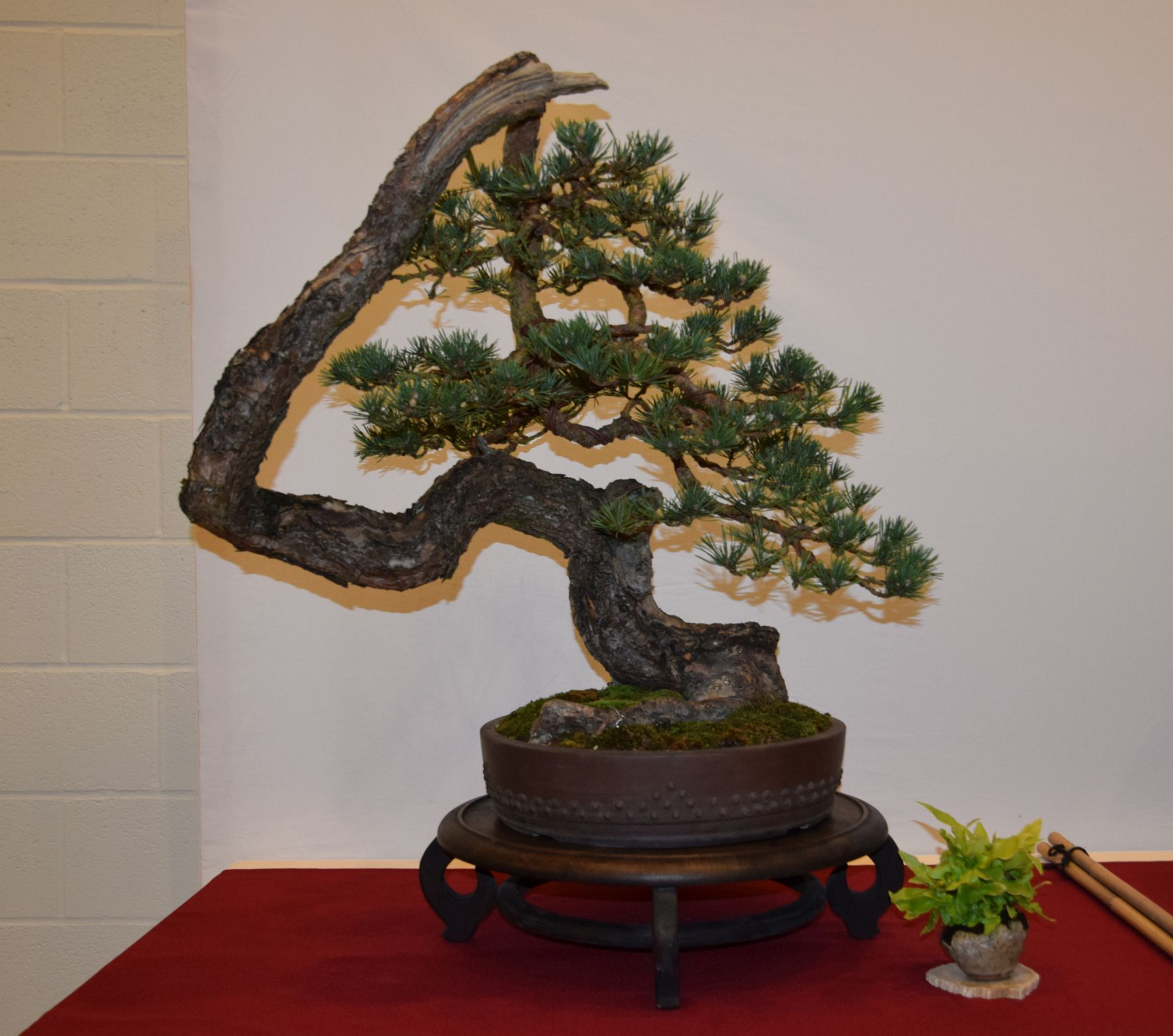 euk-bonsai-ten-2016-club-bonsai-042