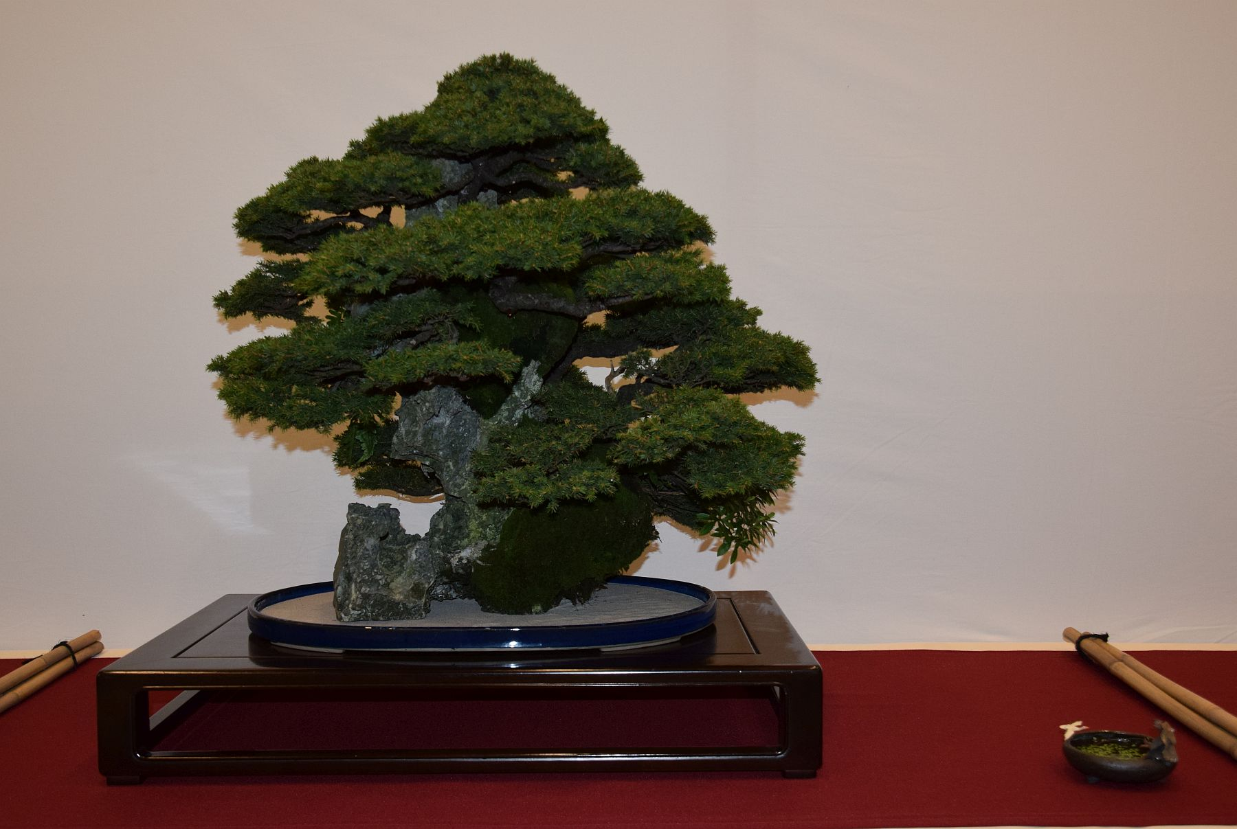euk-bonsai-ten-2016-club-bonsai-043
