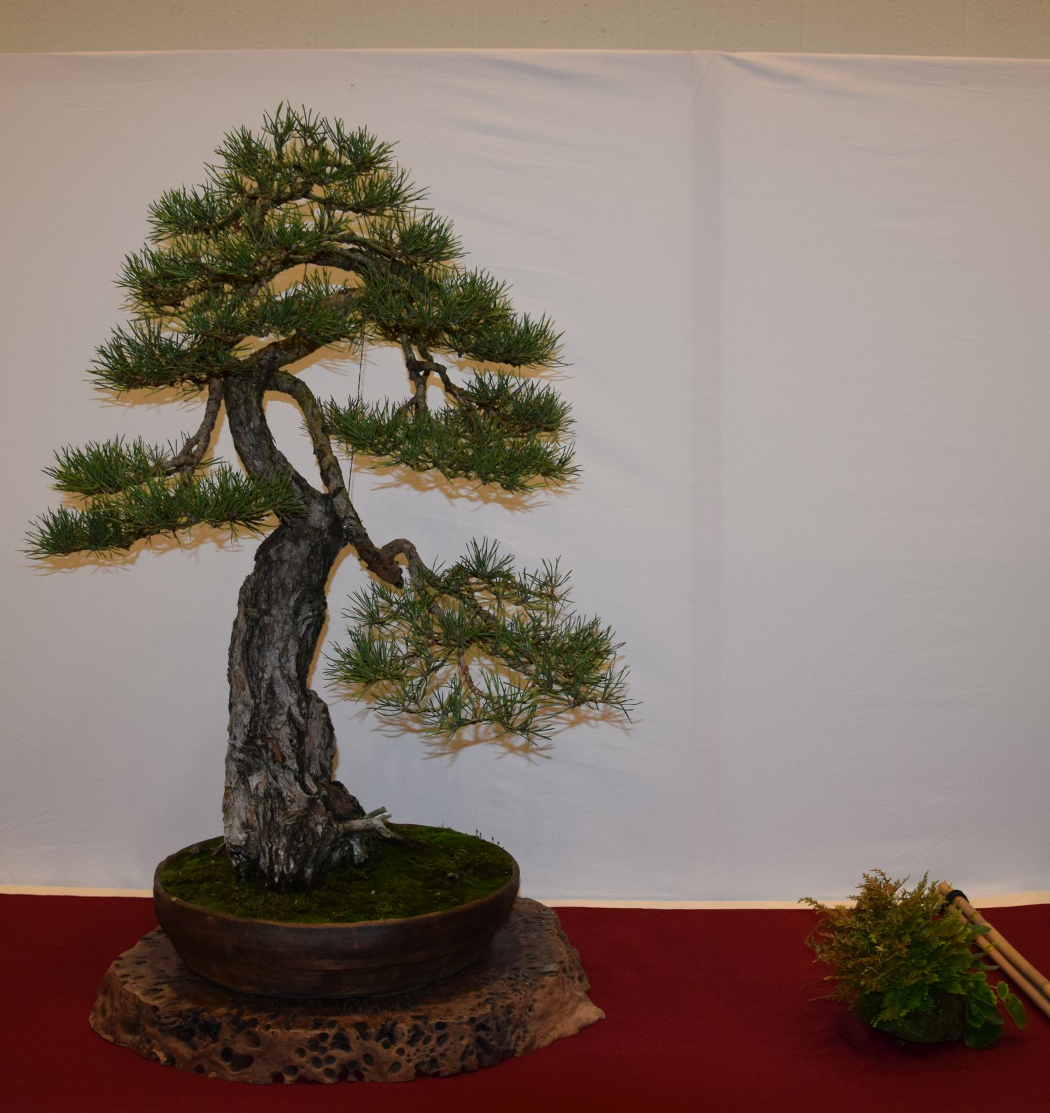 euk-bonsai-ten-2016-club-bonsai-044