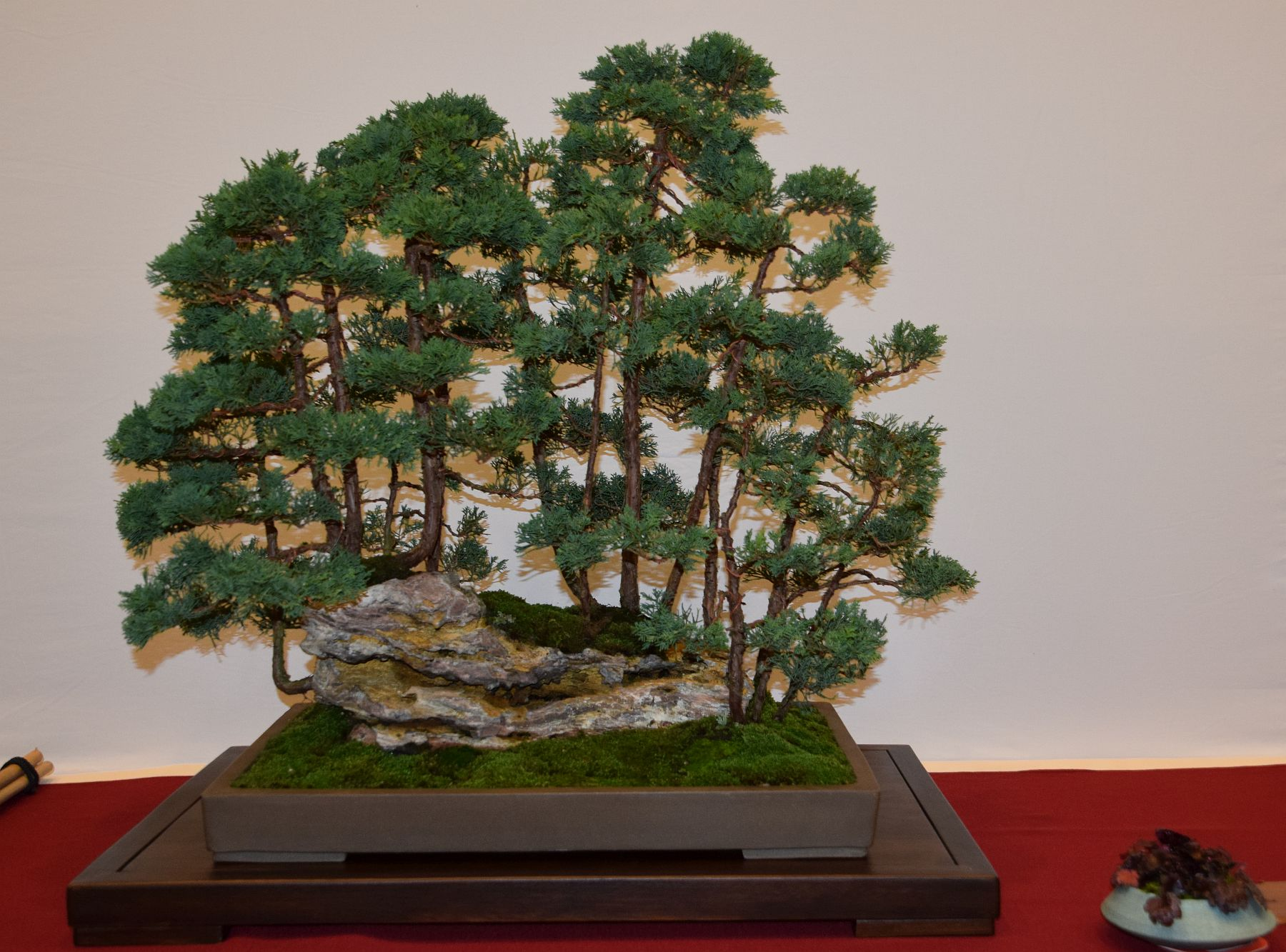 euk-bonsai-ten-2016-club-bonsai-045