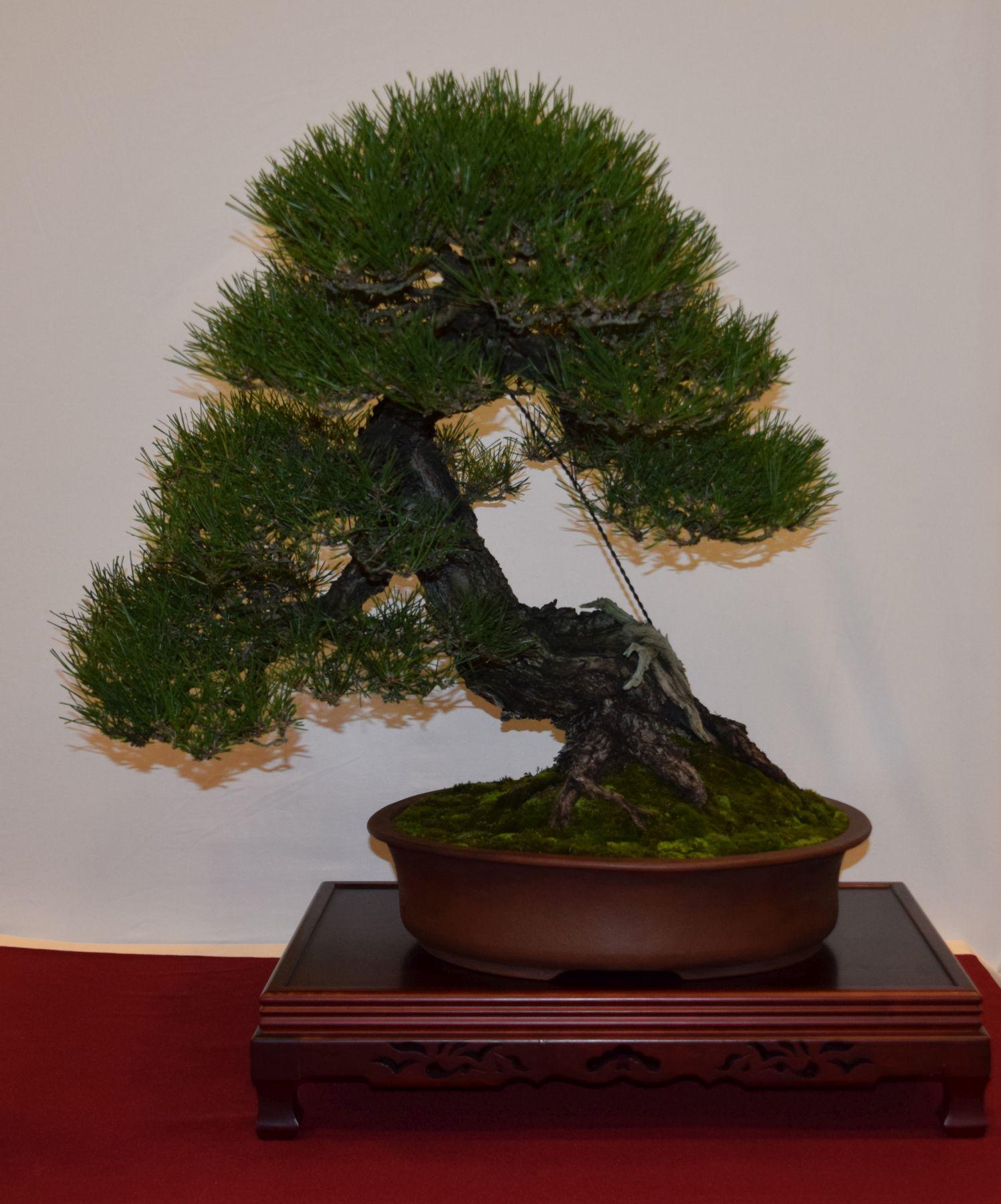 euk-bonsai-ten-2016-club-bonsai-046