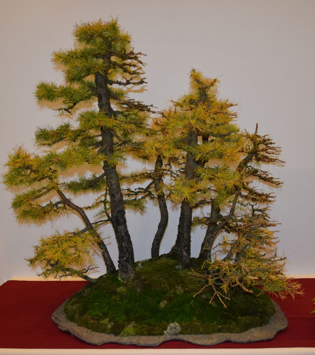 euk-bonsai-ten-2016-club-bonsai-047