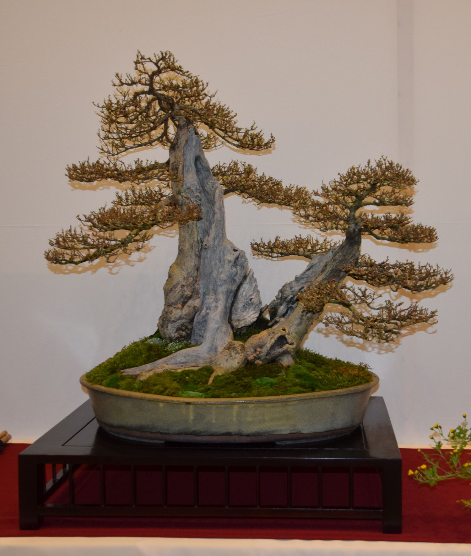 euk-bonsai-ten-2016-club-bonsai-049