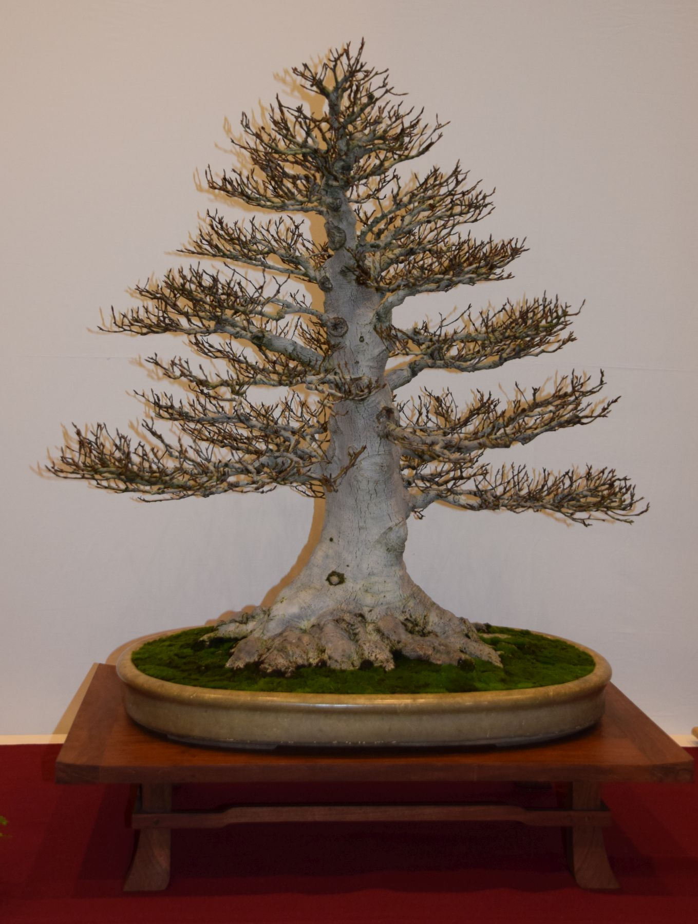 euk-bonsai-ten-2016-club-bonsai-051