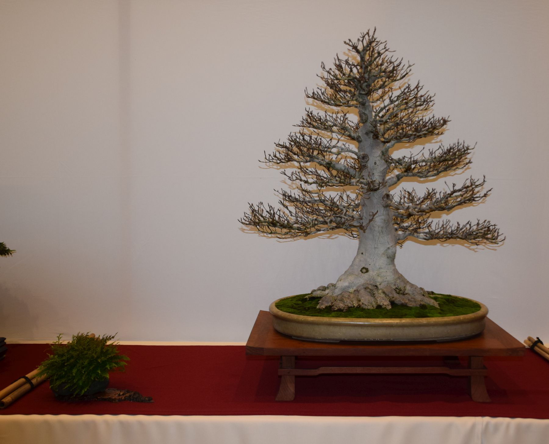 euk-bonsai-ten-2016-club-bonsai-054