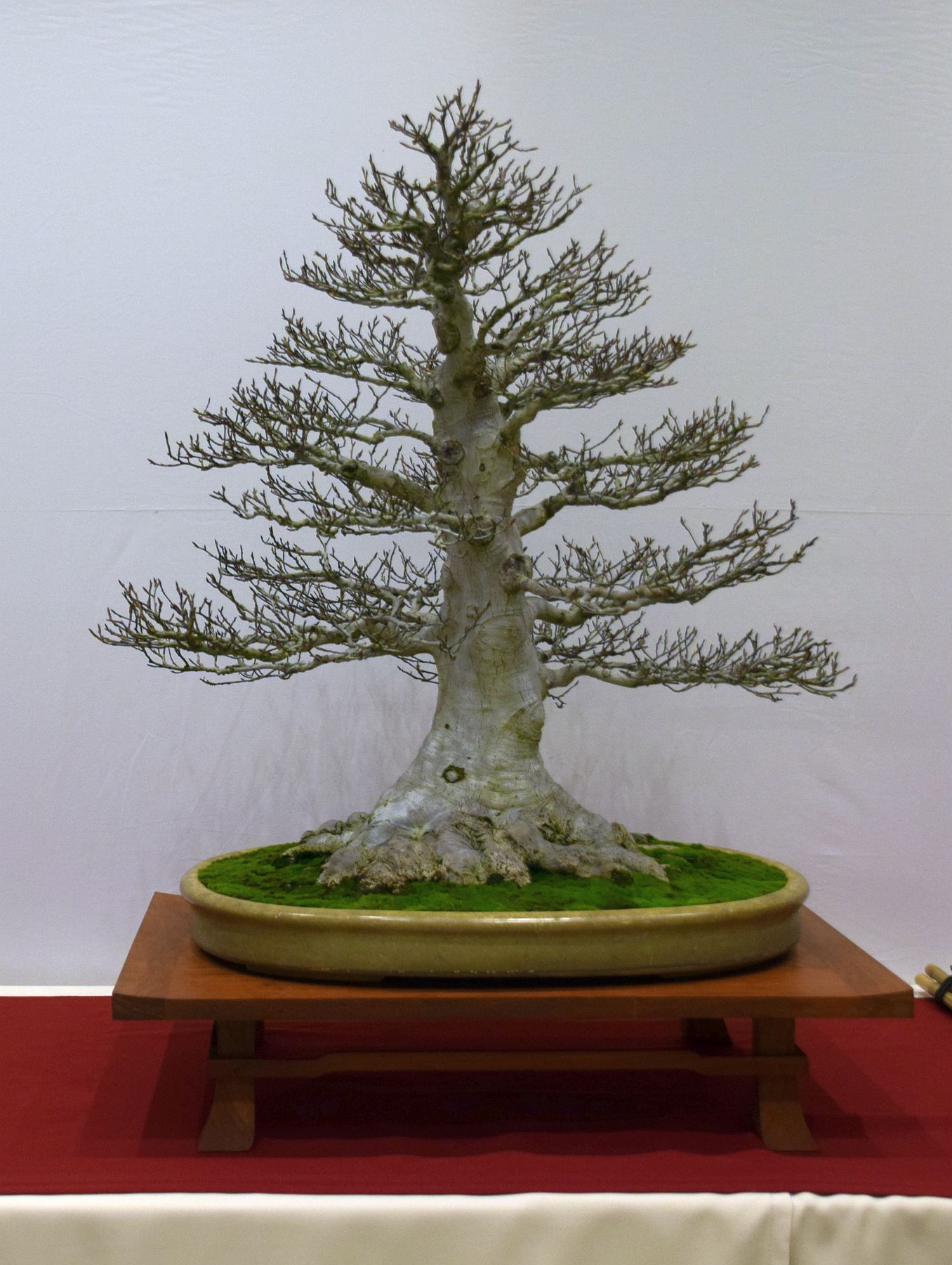 euk-bonsai-ten-2016-club-bonsai-055