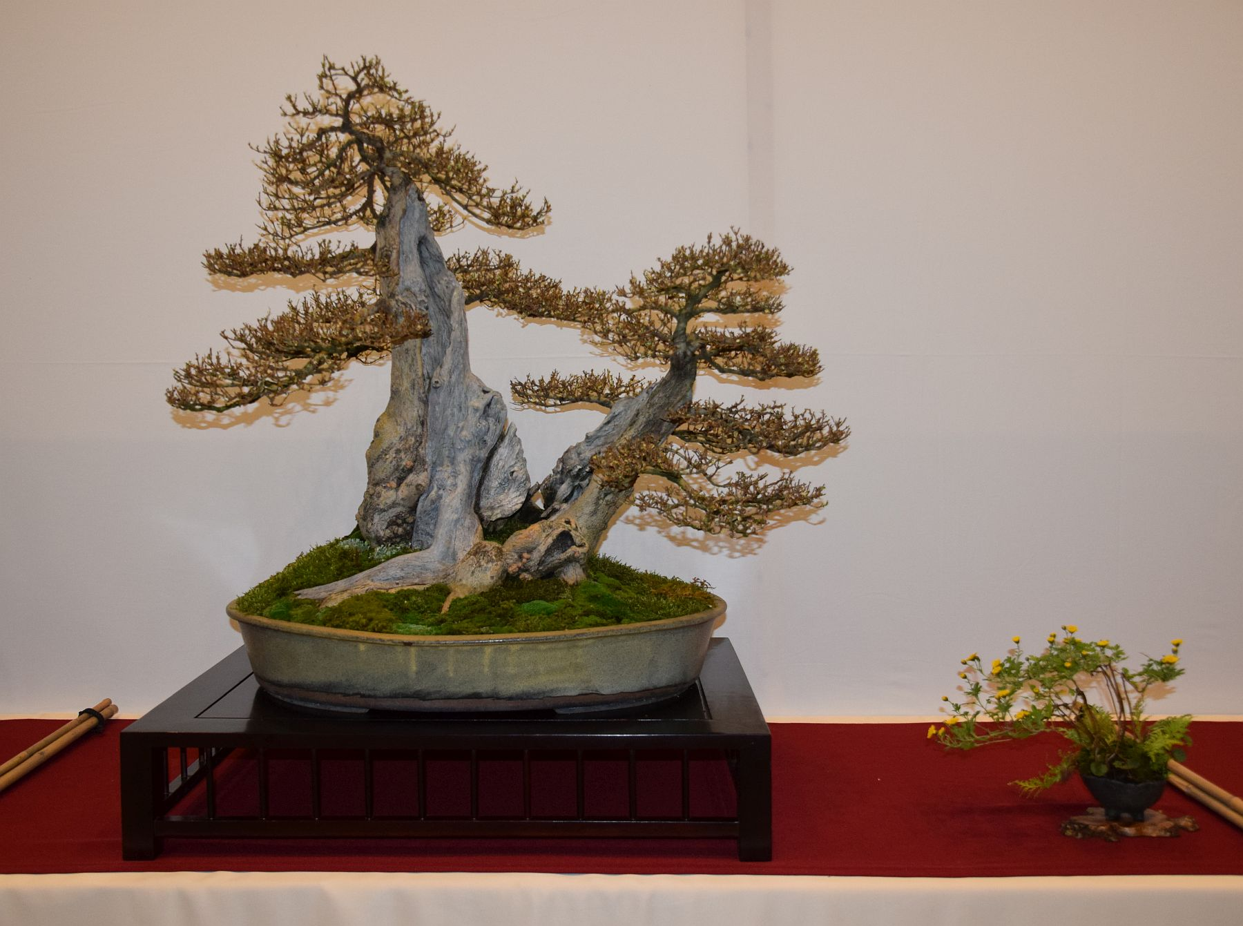 euk-bonsai-ten-2016-club-bonsai-057