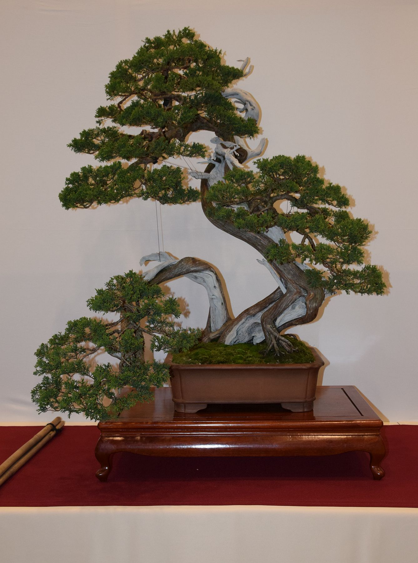 euk-bonsai-ten-2016-club-bonsai-058