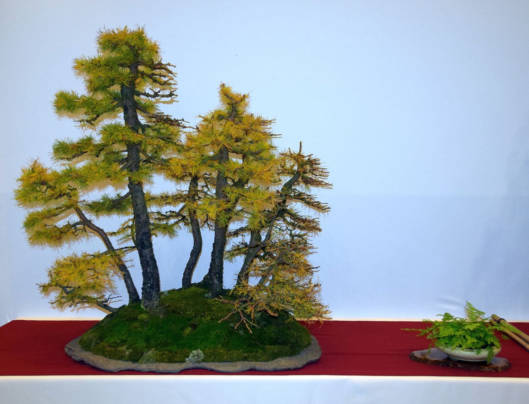 euk-bonsai-ten-2016-club-bonsai-059