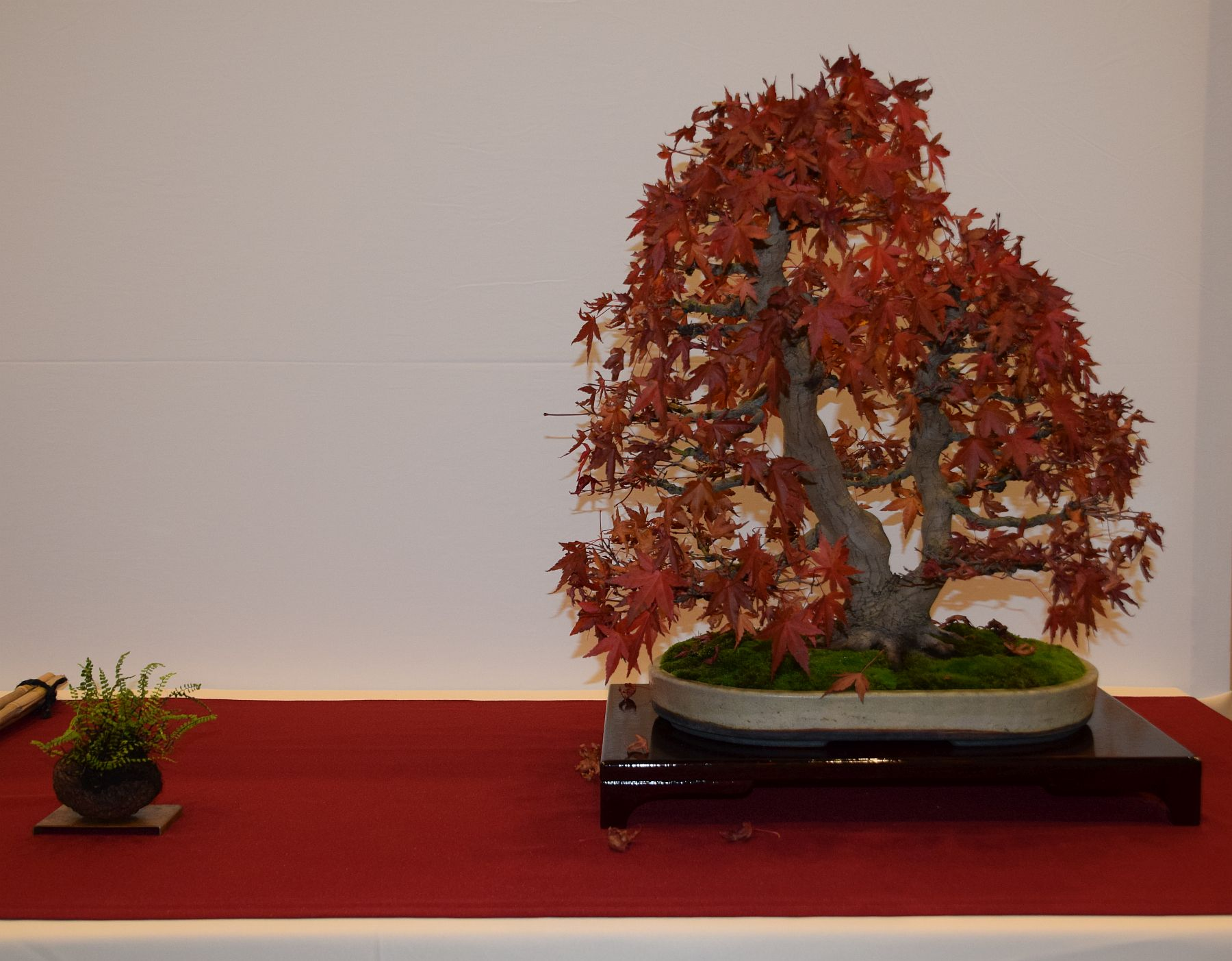 euk-bonsai-ten-2016-club-bonsai-060