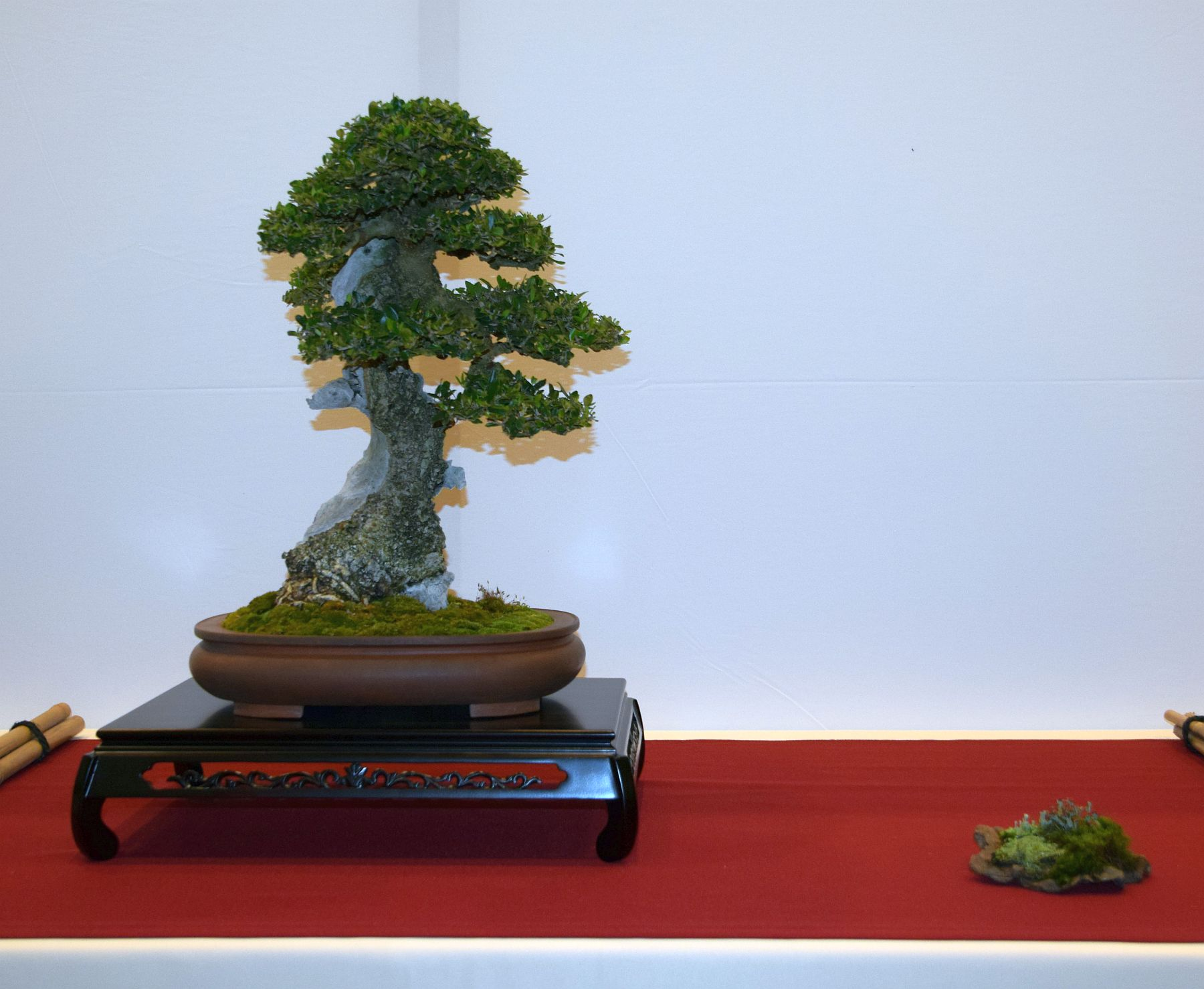 euk-bonsai-ten-2016-club-bonsai-062