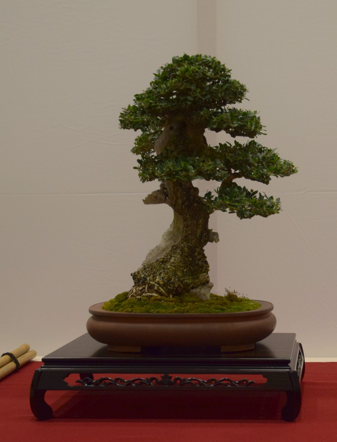 euk-bonsai-ten-2016-club-bonsai-063