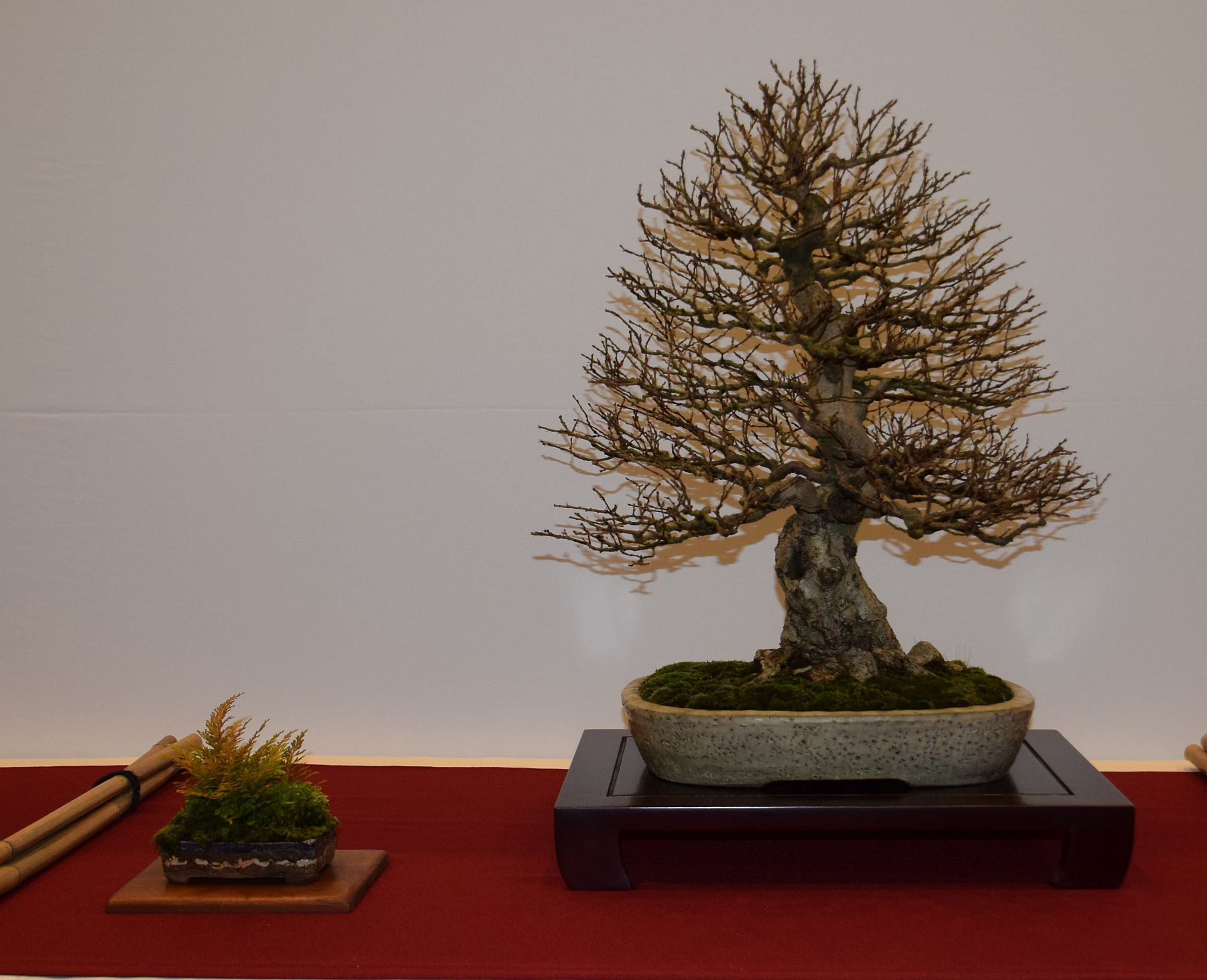 euk-bonsai-ten-2016-club-bonsai-064
