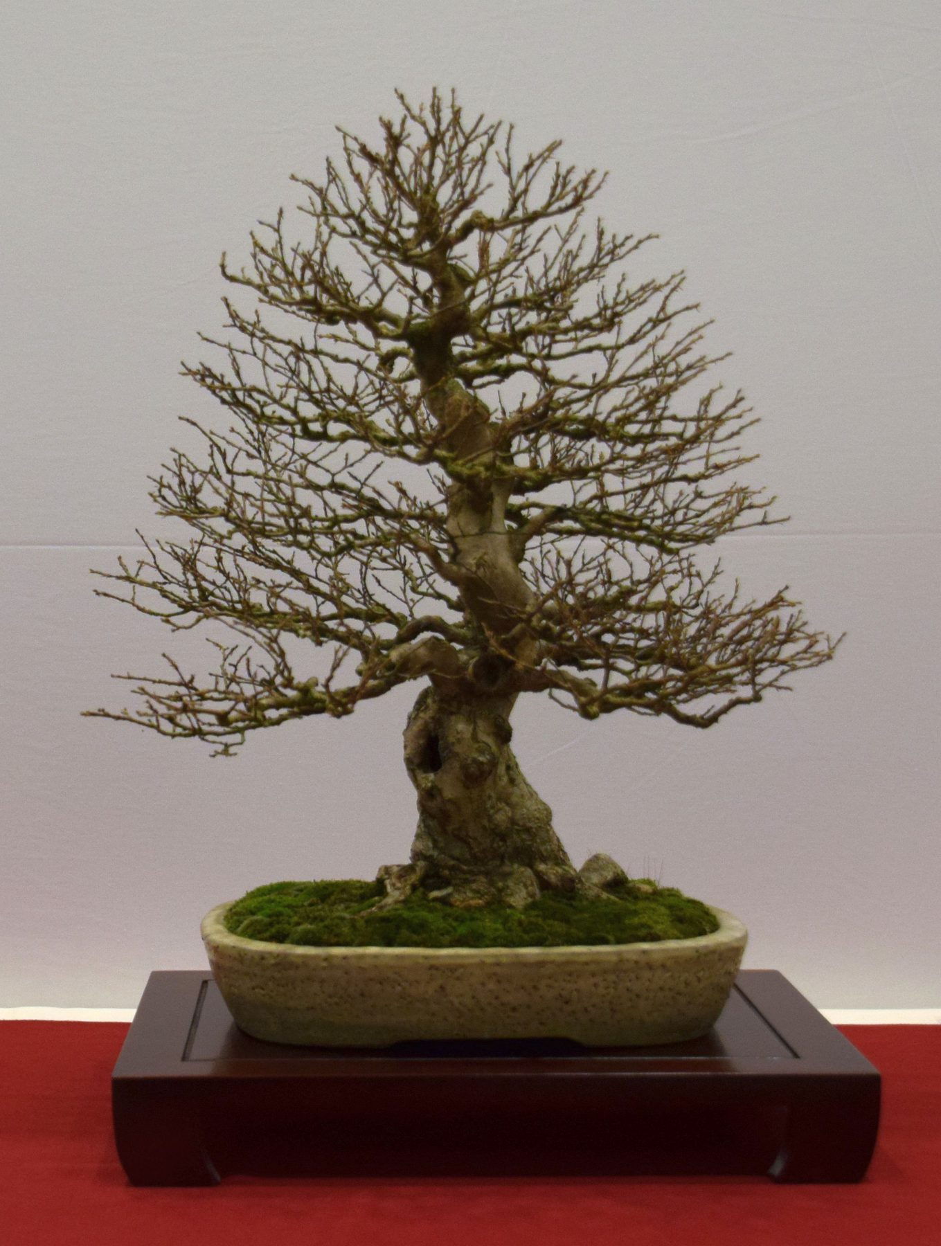 euk-bonsai-ten-2016-club-bonsai-065