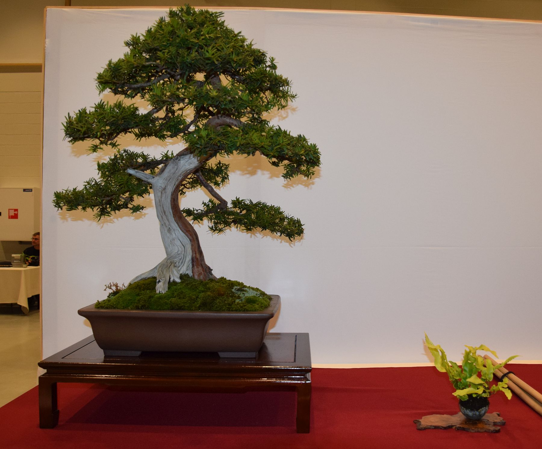 euk-bonsai-ten-2016-club-bonsai-066