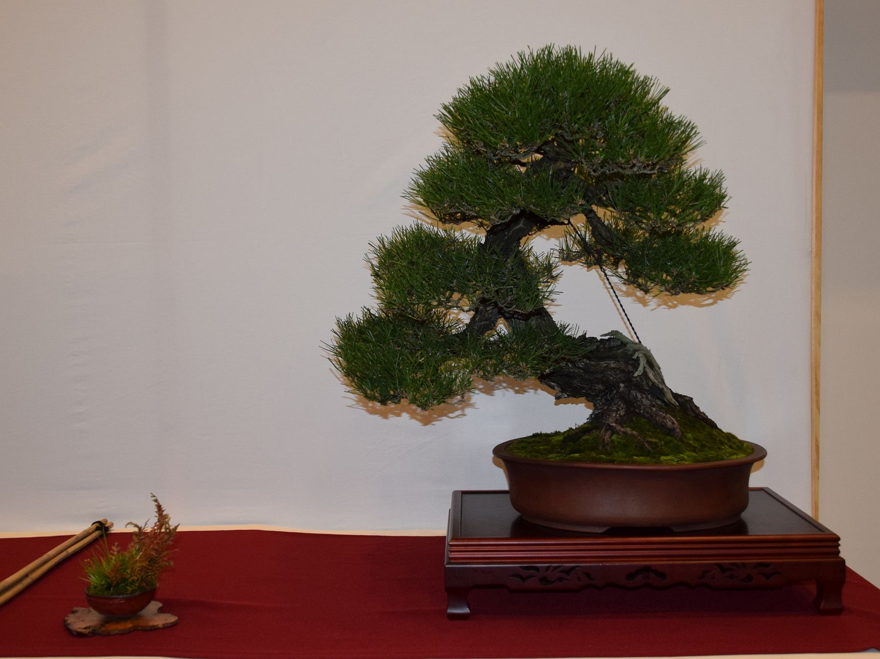 euk-bonsai-ten-2016-club-bonsai-067