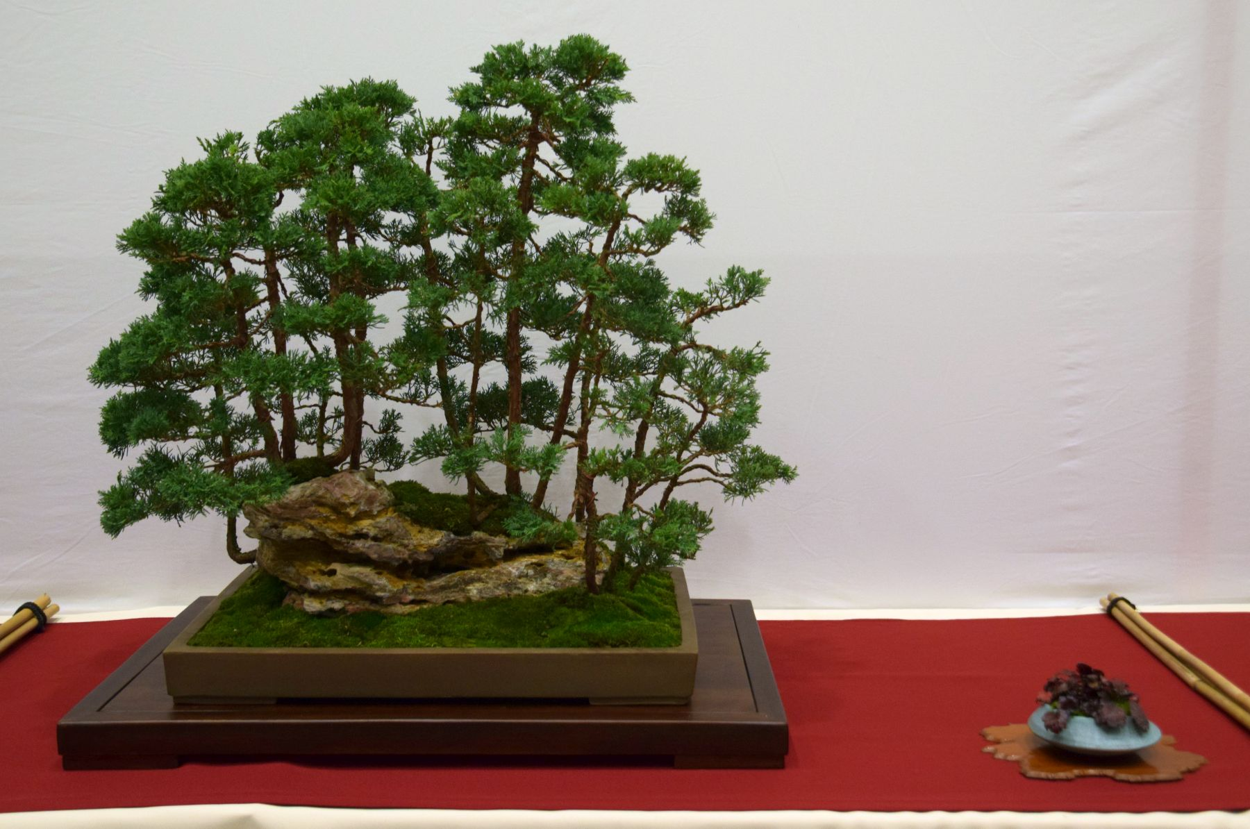 euk-bonsai-ten-2016-club-bonsai-068