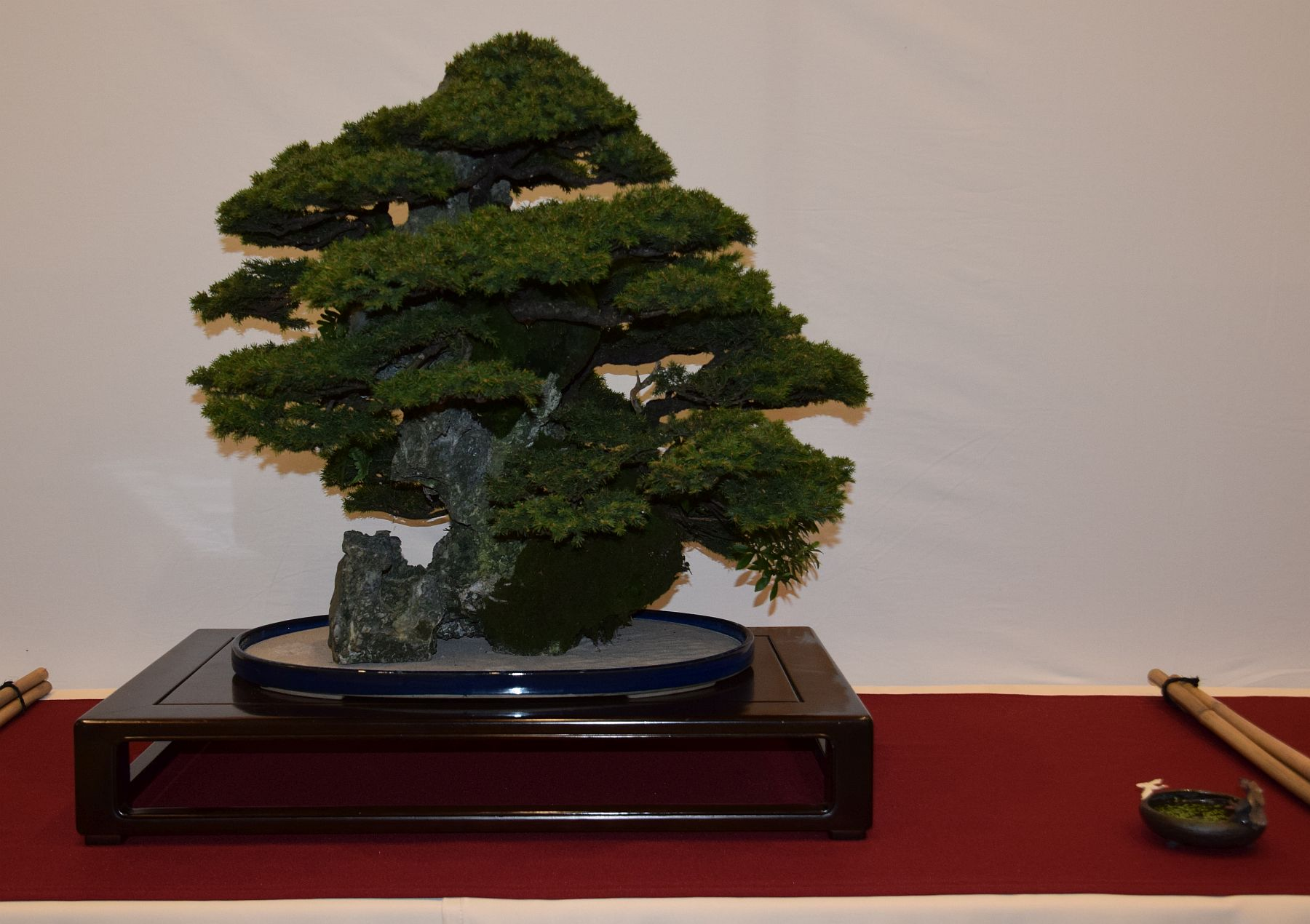 euk-bonsai-ten-2016-club-bonsai-070