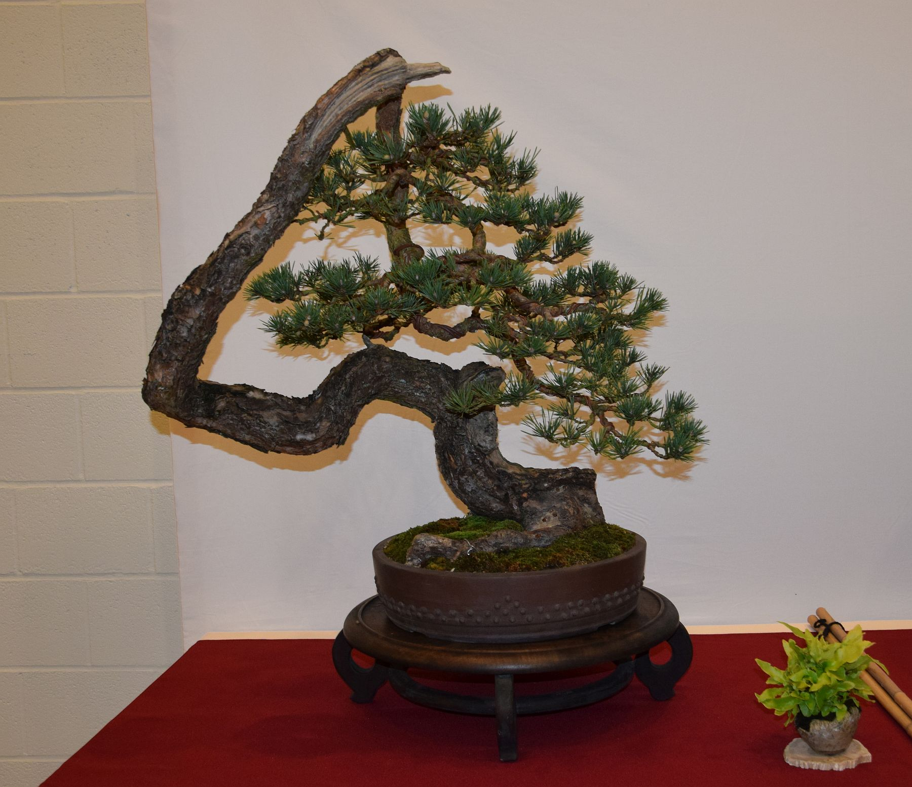 euk-bonsai-ten-2016-club-bonsai-071