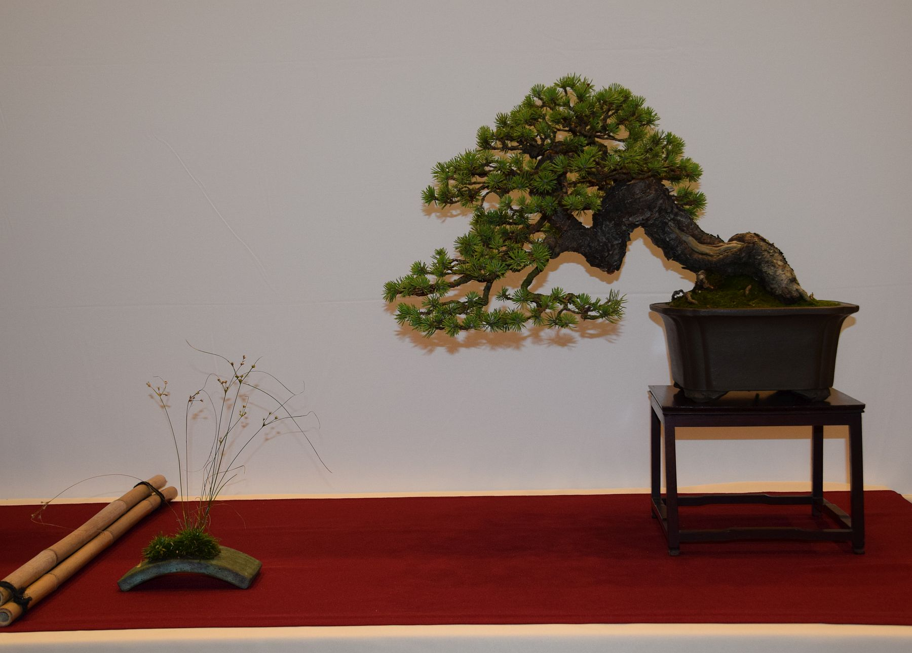 euk-bonsai-ten-2016-club-bonsai-072